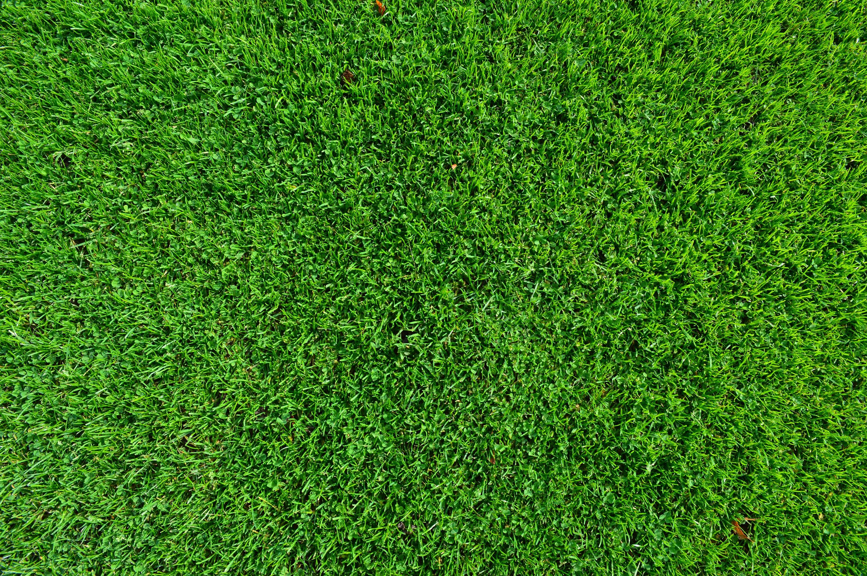 H nh nh th c v t c nh ng b i c ng c l m u for Grass carpet tiles