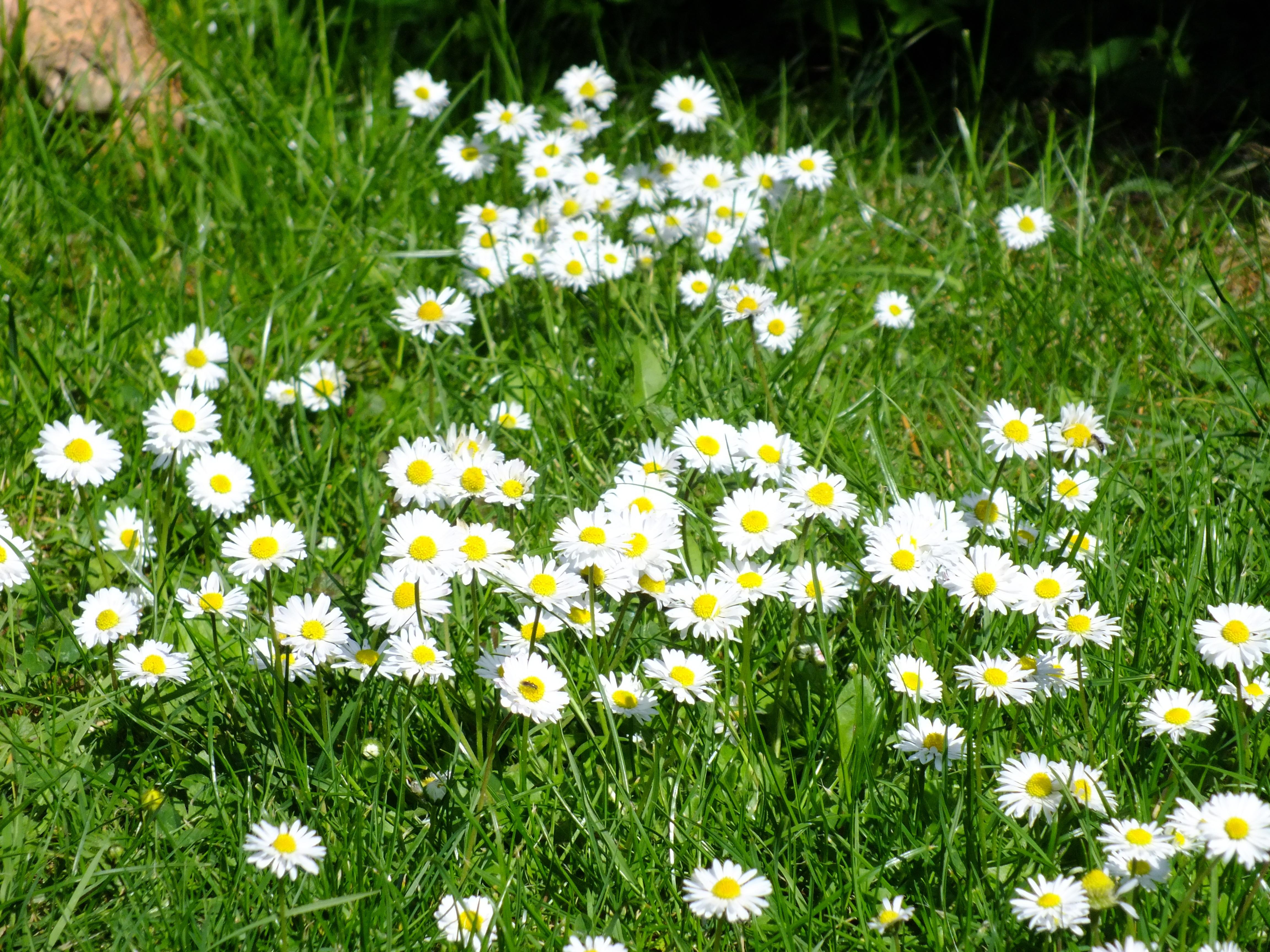 Immagini Belle : erba, prateria, fiore, primavera, botanica, flora ...