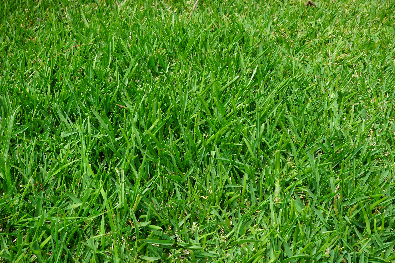 Болтай, картинки зеленая трава для детей