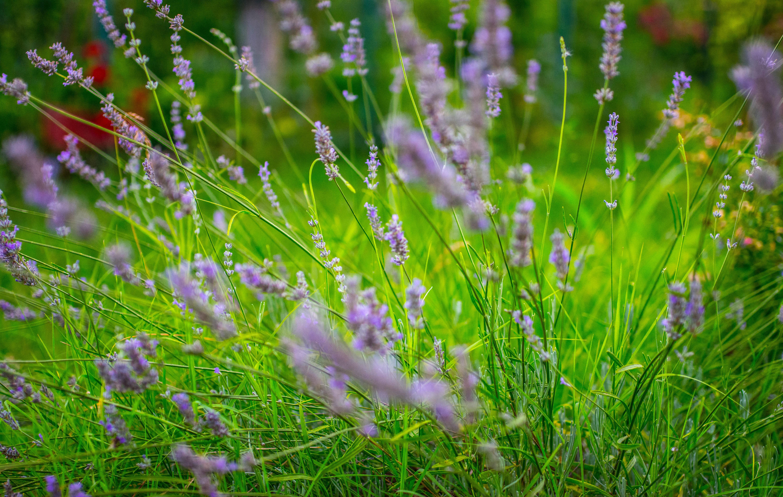 Трава фото картинки красивые