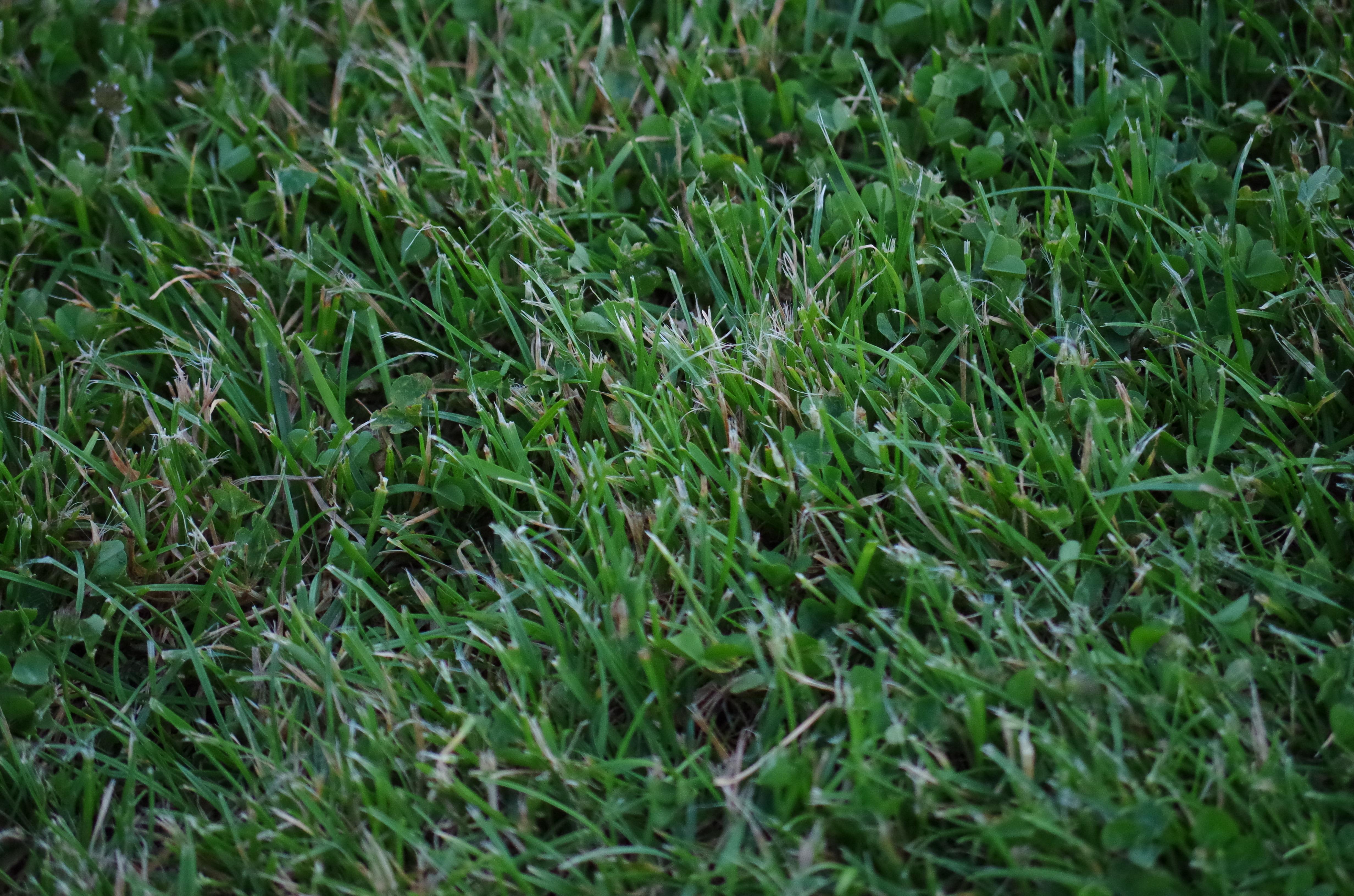 Kostenlose Foto Gras Feld Rasen Wiese Prarie Blatt Blume