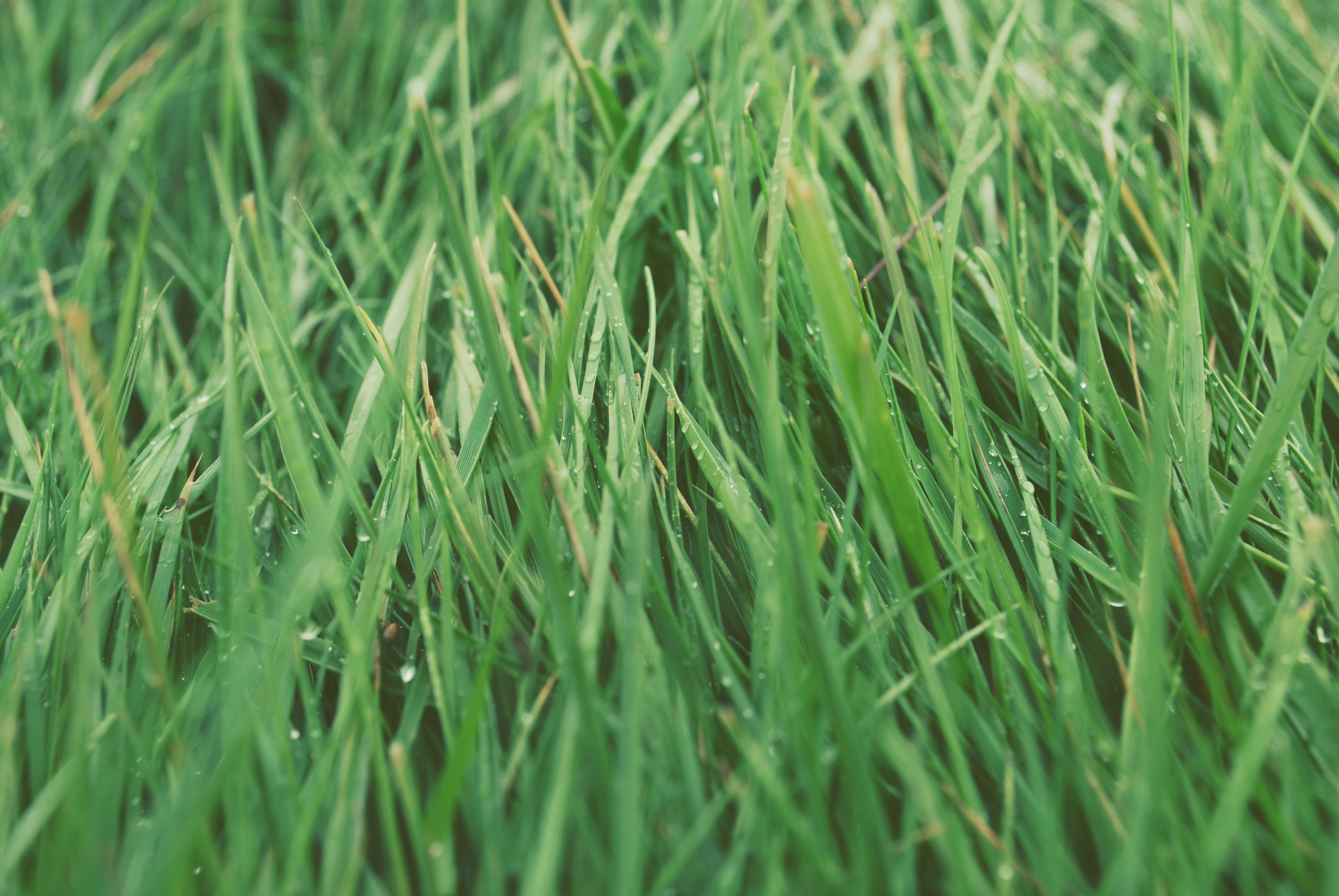 gratis afbeeldingen fabriek veld gazon weide prairie blad groen grasland bevloering. Black Bedroom Furniture Sets. Home Design Ideas