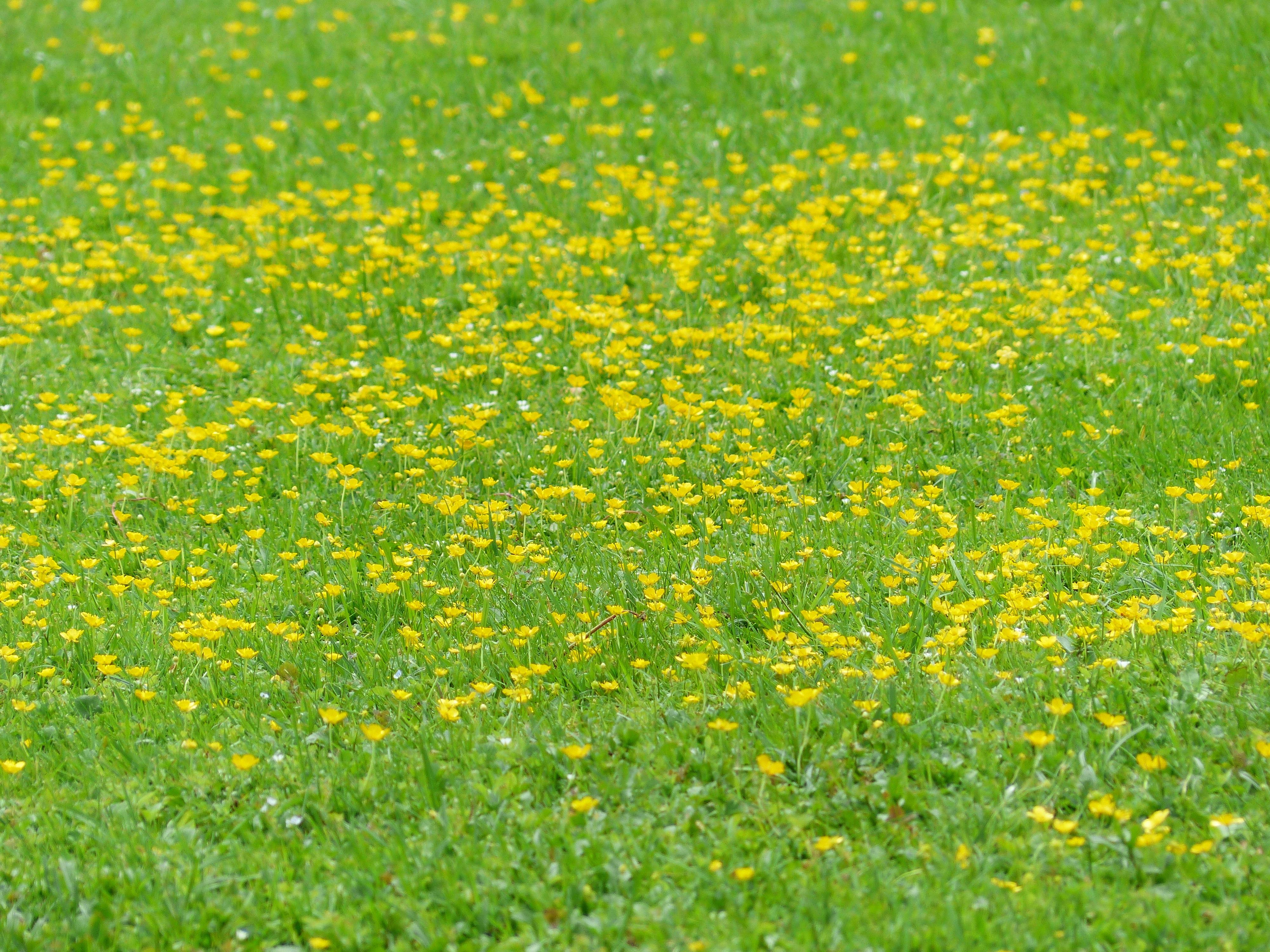 Картинки полянок без цветов