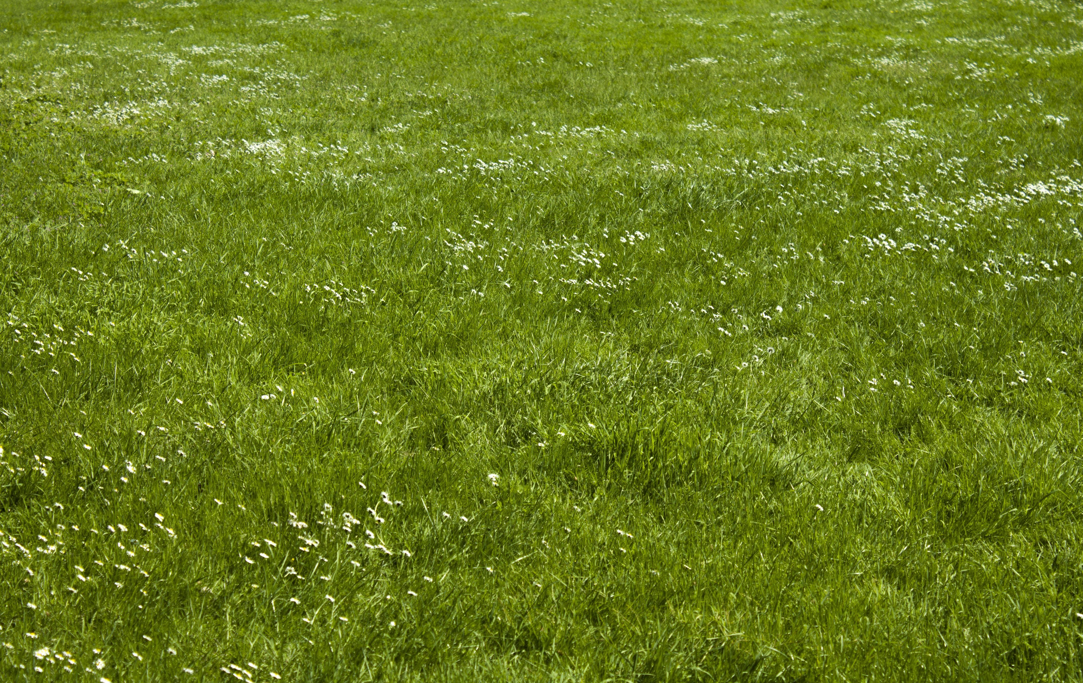 Fotos gratis c sped planta campo prado pradera - Cesped natural ...
