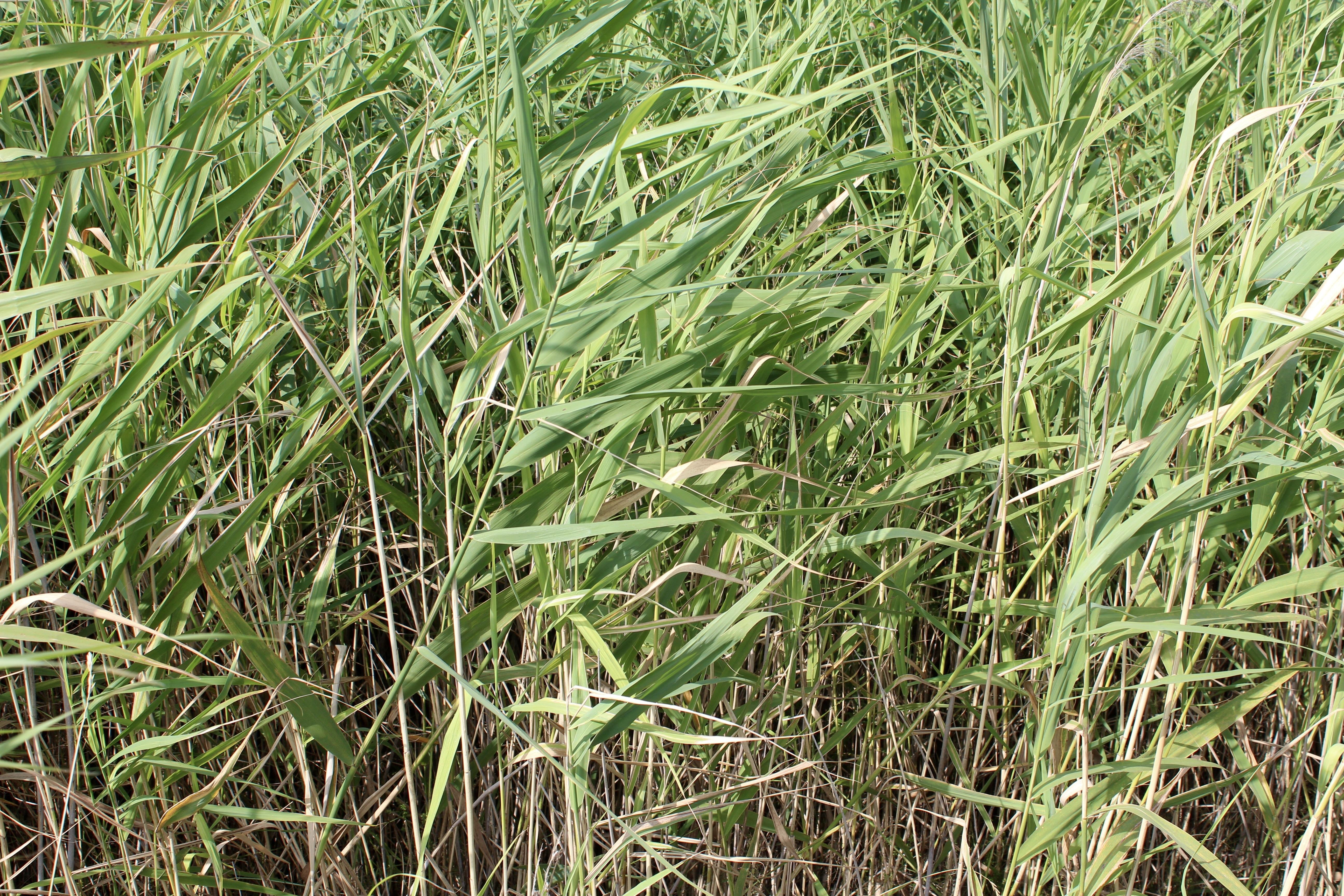 grass plant field lawn meadow prairie texture flower green crop soil agriculture background grassland wallpaper bamboo