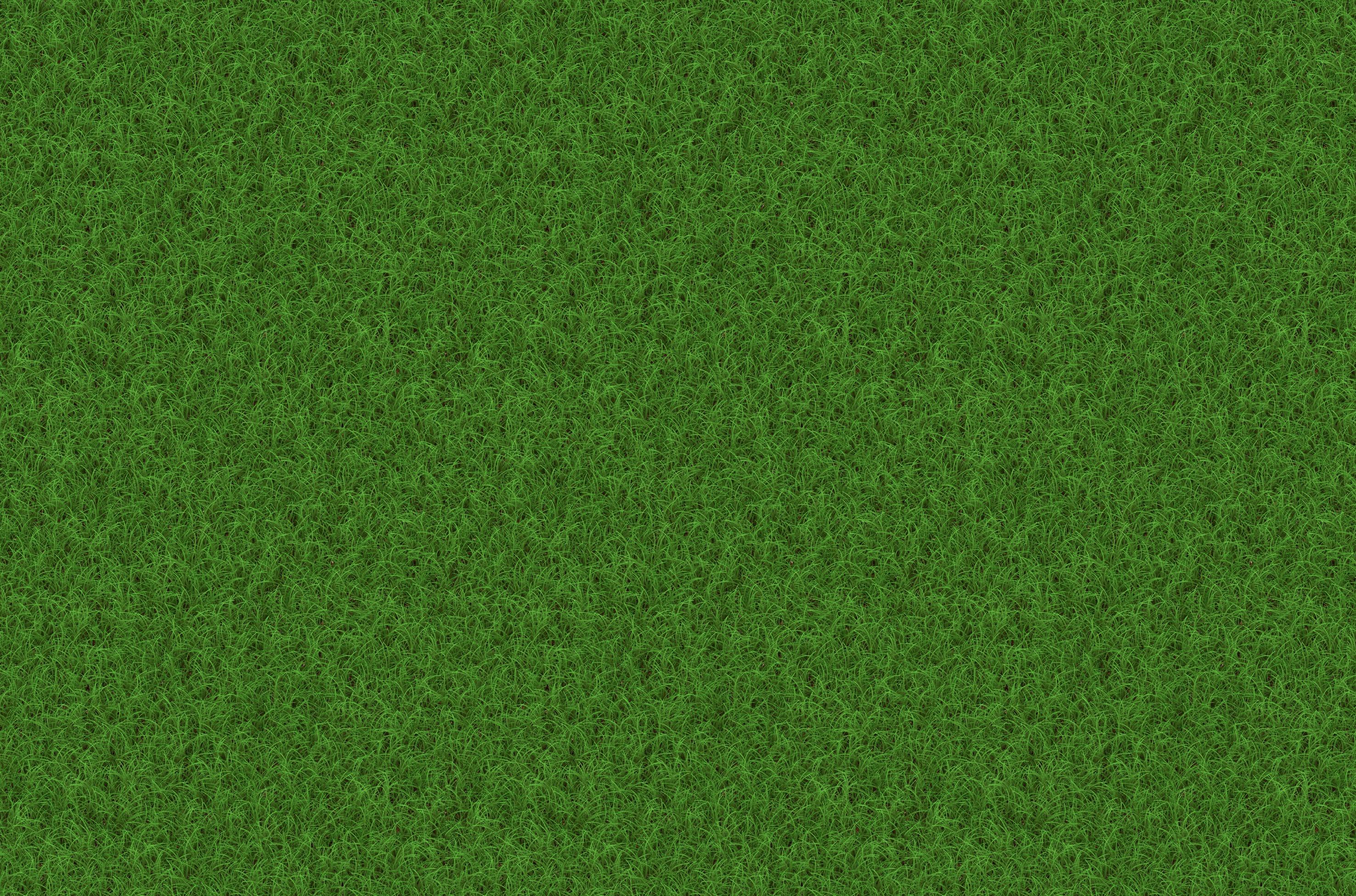 images gratuites herbe plante champ pelouse prairie. Black Bedroom Furniture Sets. Home Design Ideas