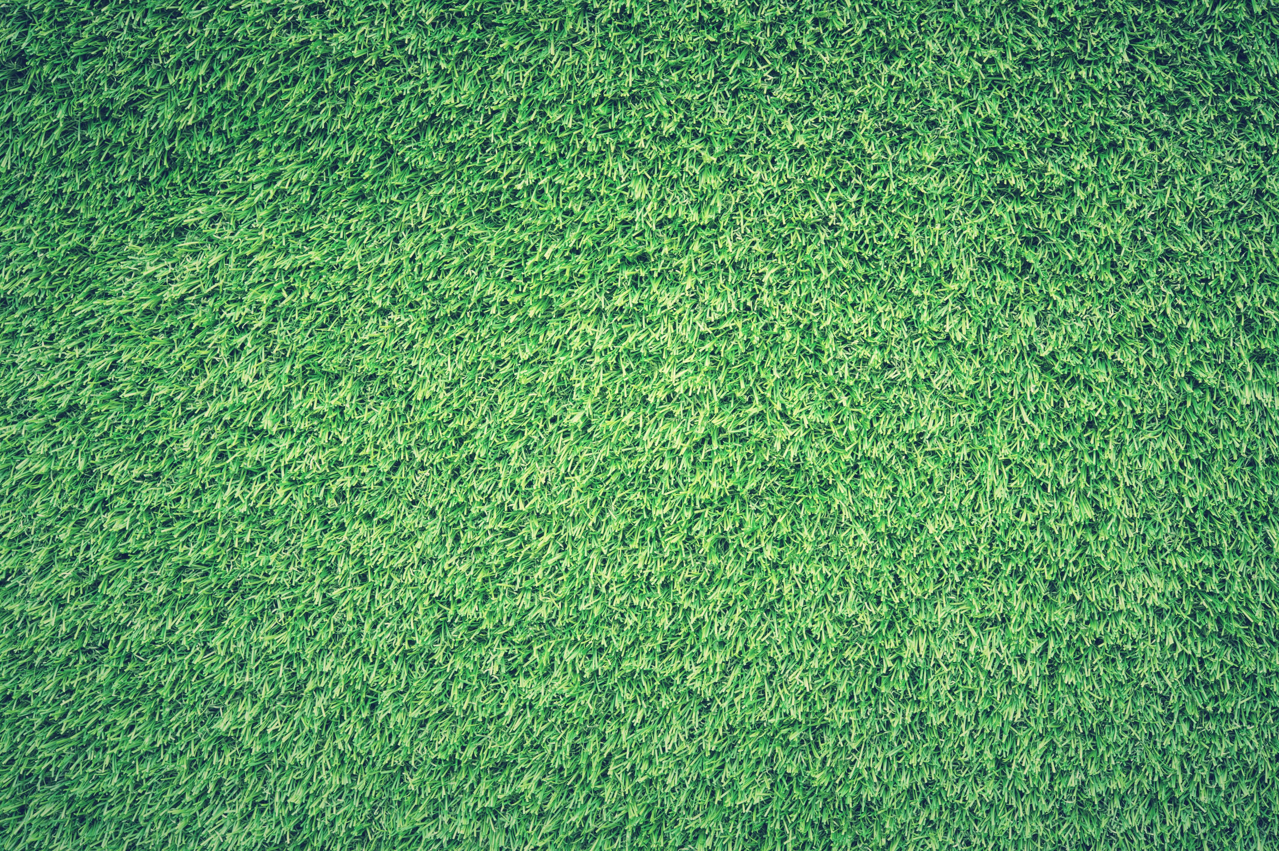 Fotos gratis : planta, campo, textura, hoja, verde, cultivo, suelo ...
