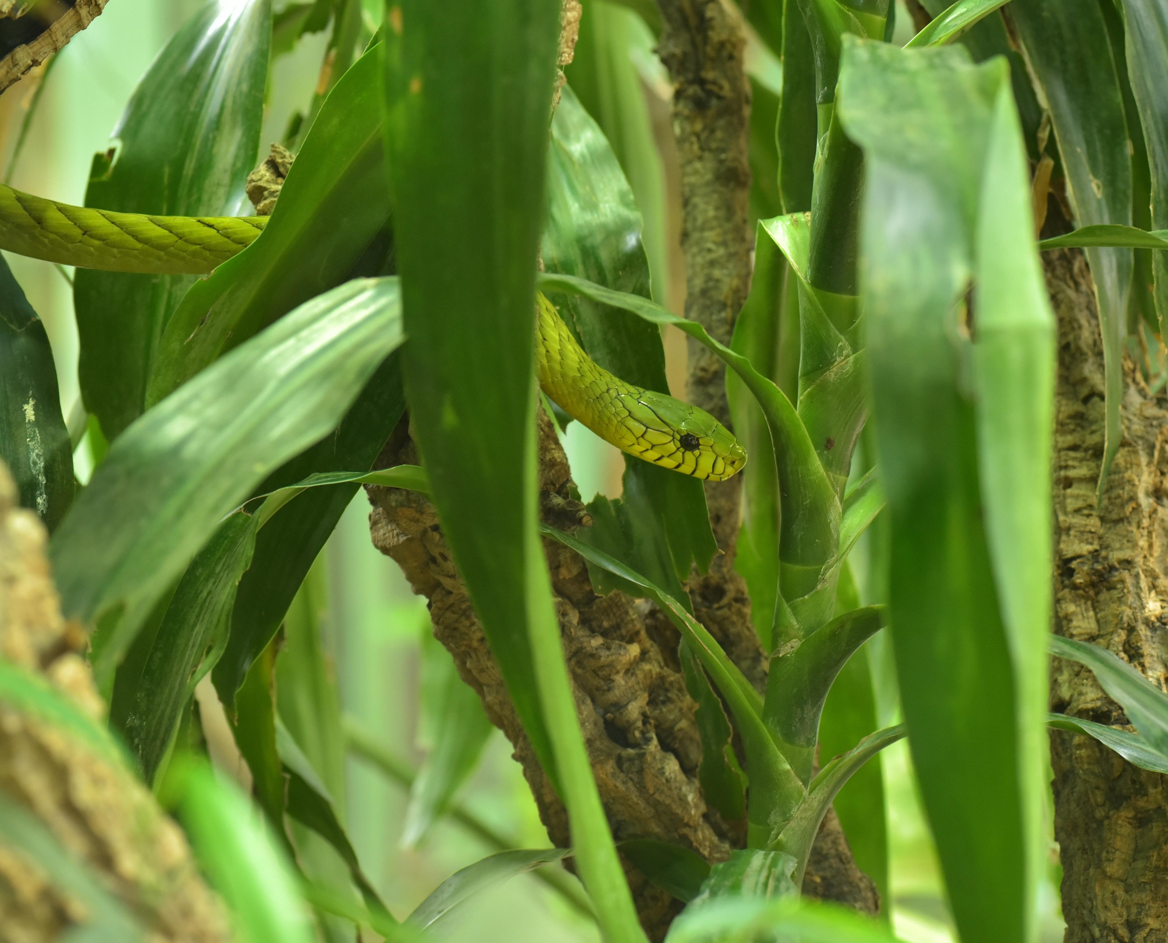 Free Images Flower Food Jungle Produce Crop Botany Predator