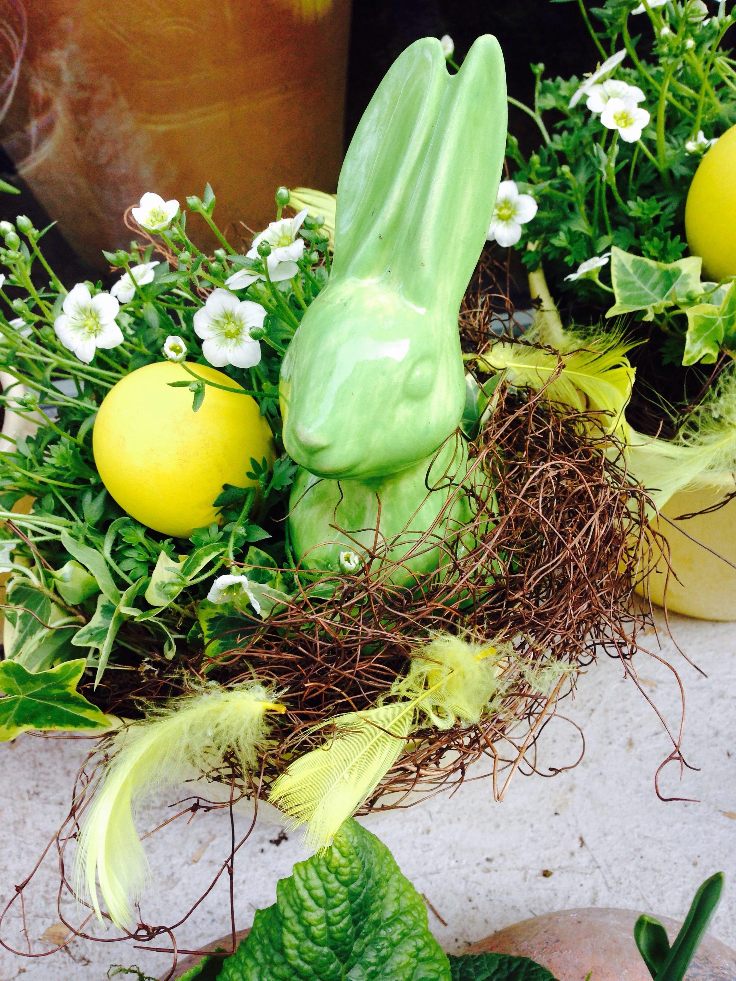 Gambar Rumput Menanam Makanan Musim Semi Hijau Herba