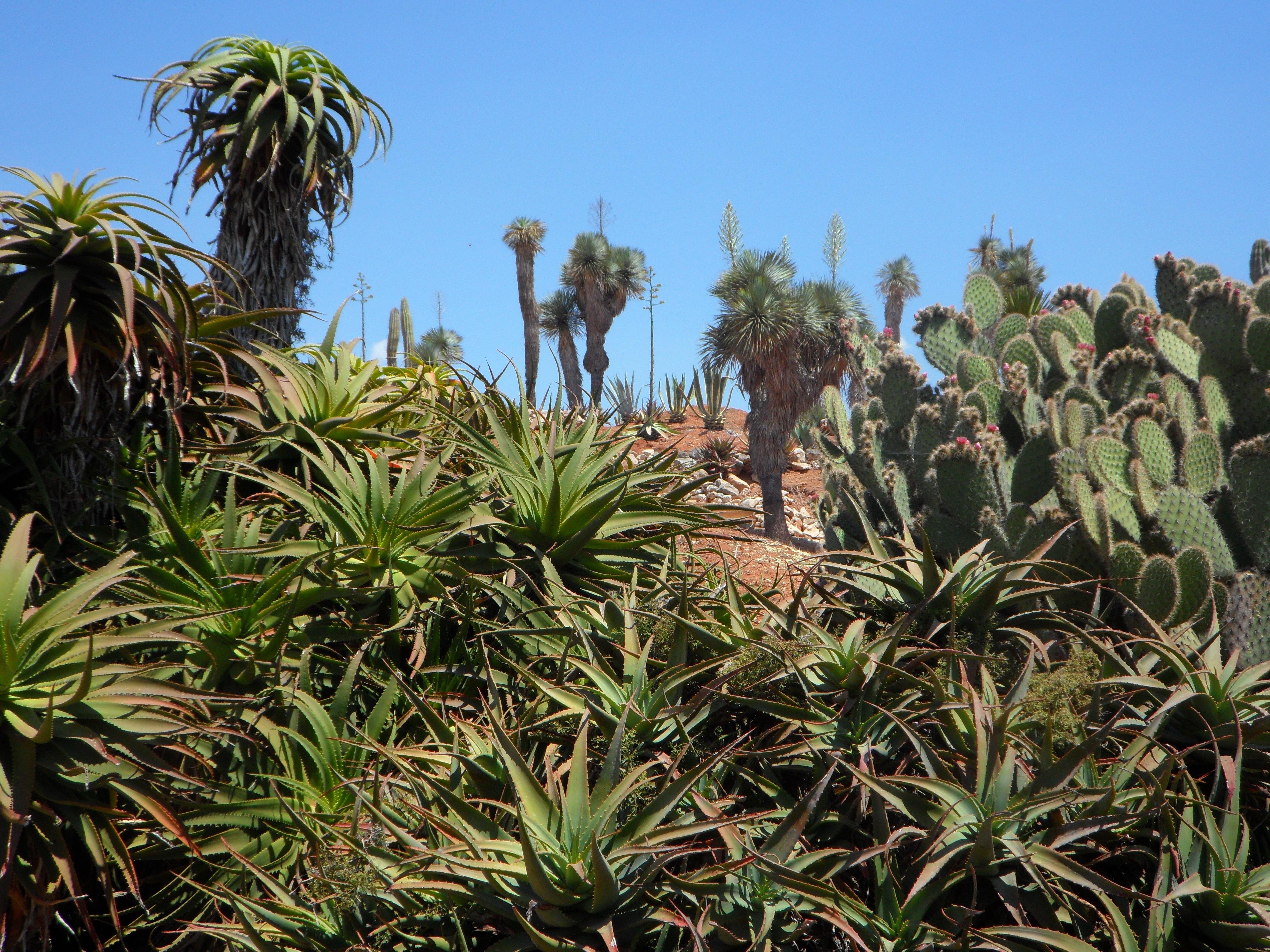 Images gratuites herbe fleur jungle surgir for Plante jungle