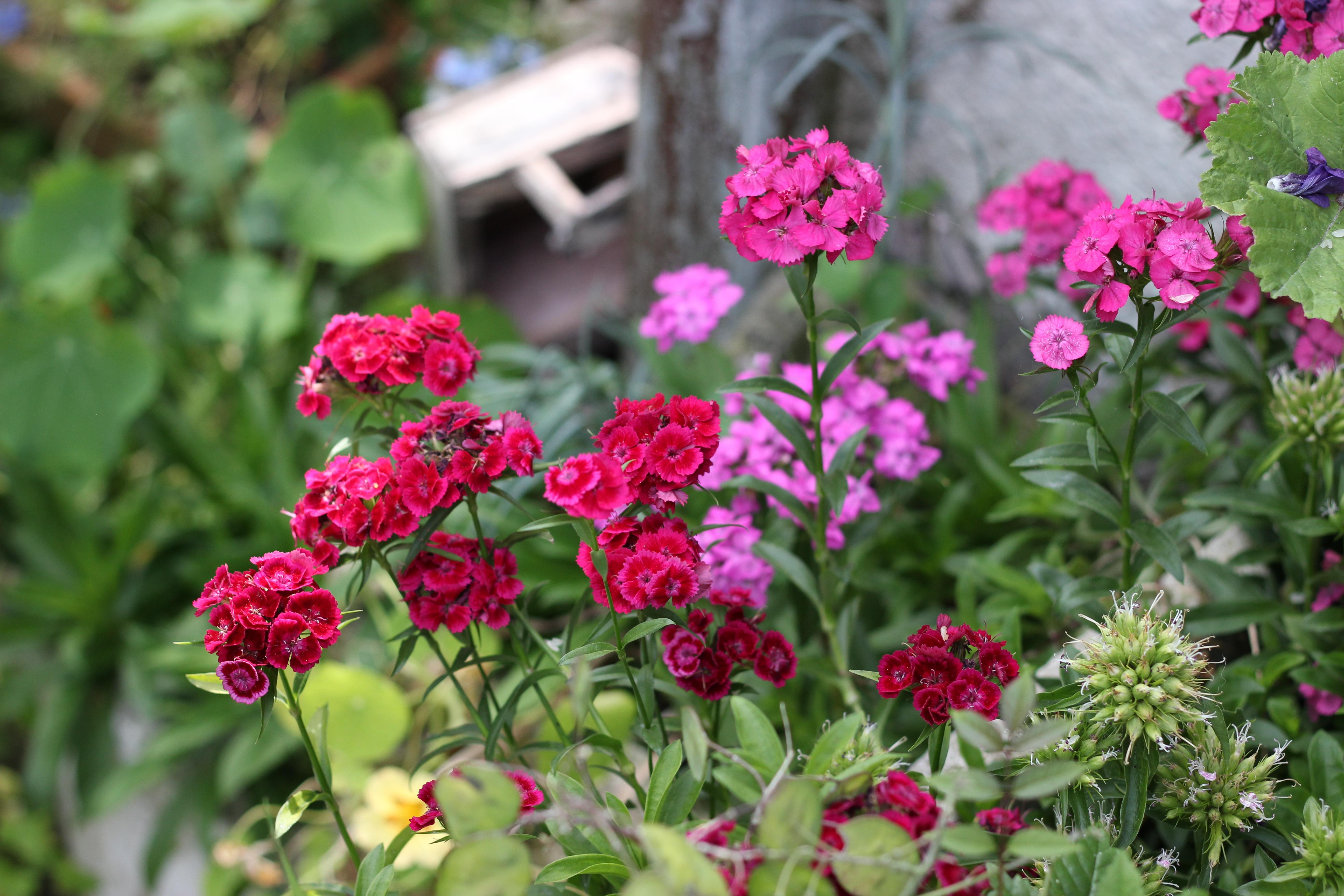 Best fleur de jardin verveine pictures design trends for Fleurs jardin printemps