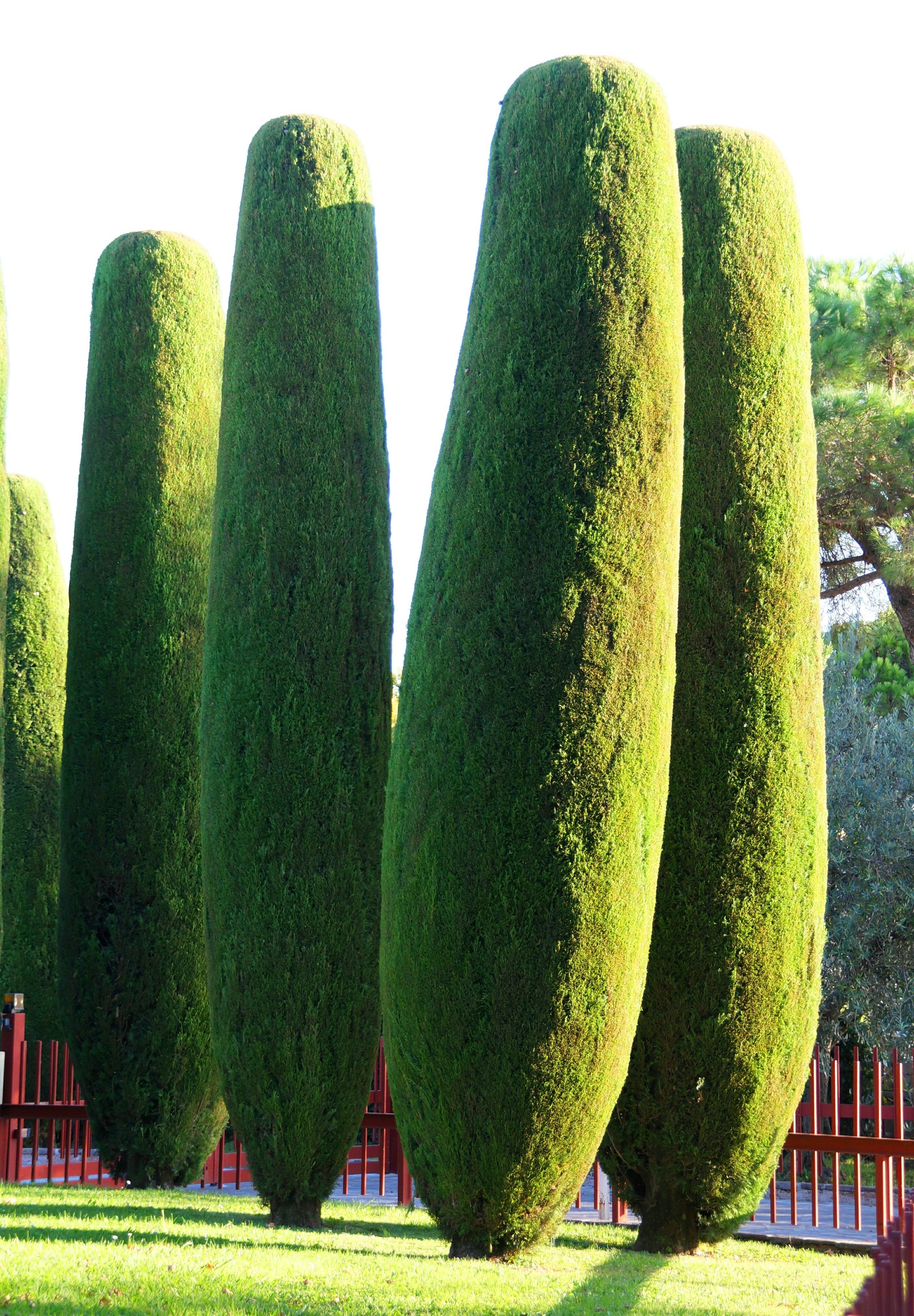 Banco de imagens grama plantar comida produzir - Cortar hierba alta ...