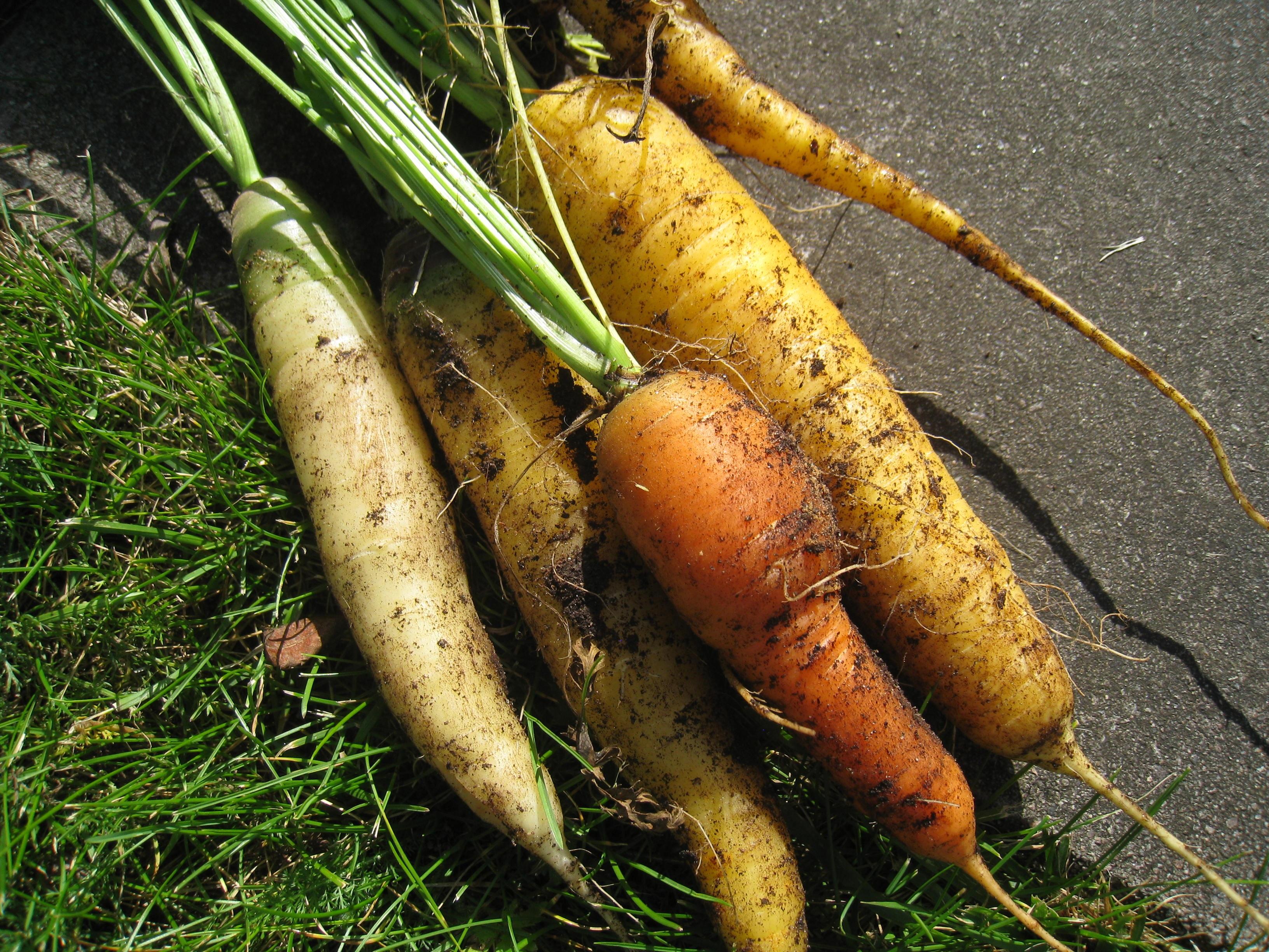 Poze Plantă Alimente Legume şi Fructe Vegetal Toamnă