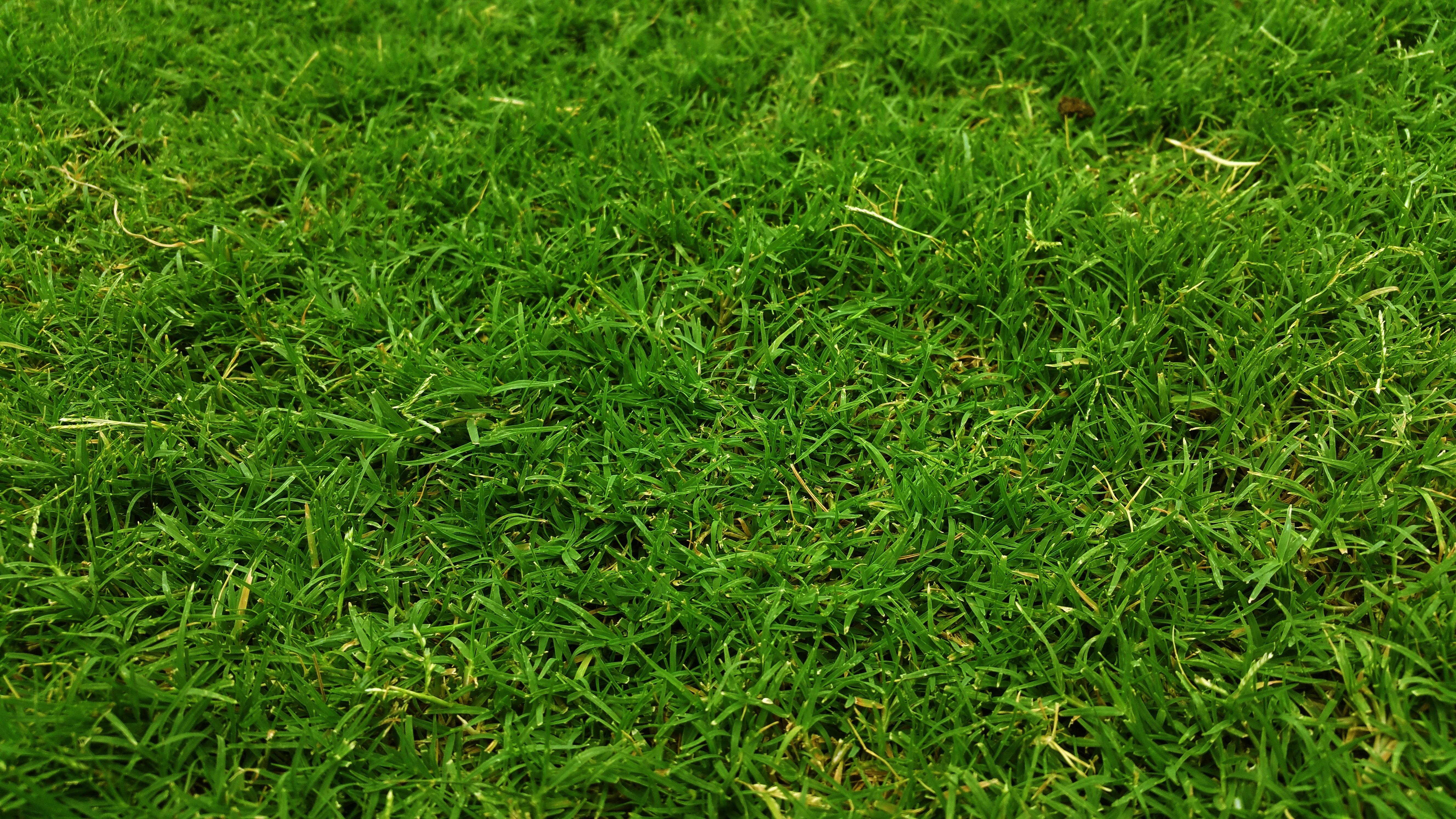 Free Images Ground Lawn Meadow Leaf Flower Soil Grassy Grassland Playground Shrub Grasslands Grass Land Green Flooring Flowering Plant