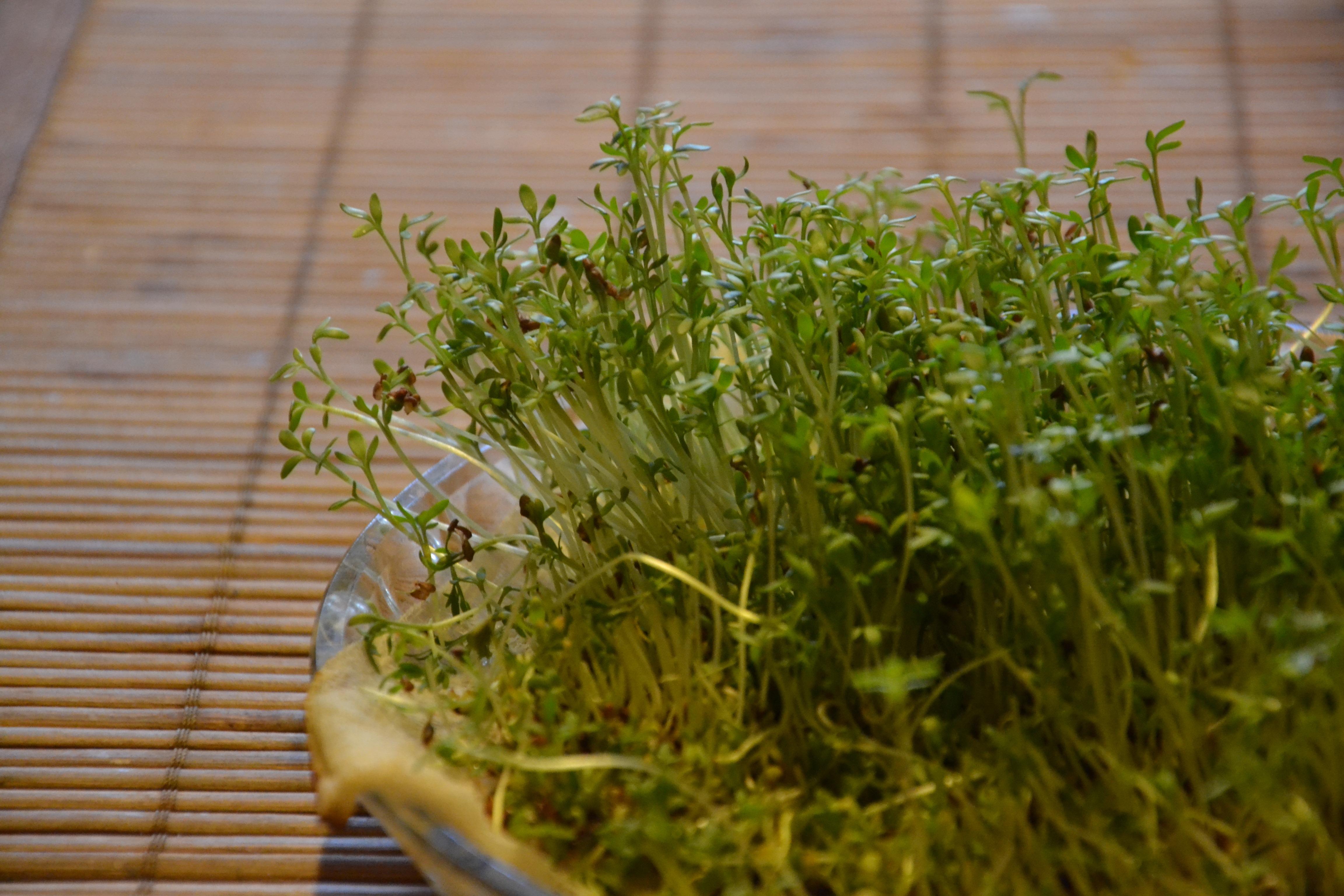 Images gratuites herbe pelouse fleur aliments vert for Plante herbe haute
