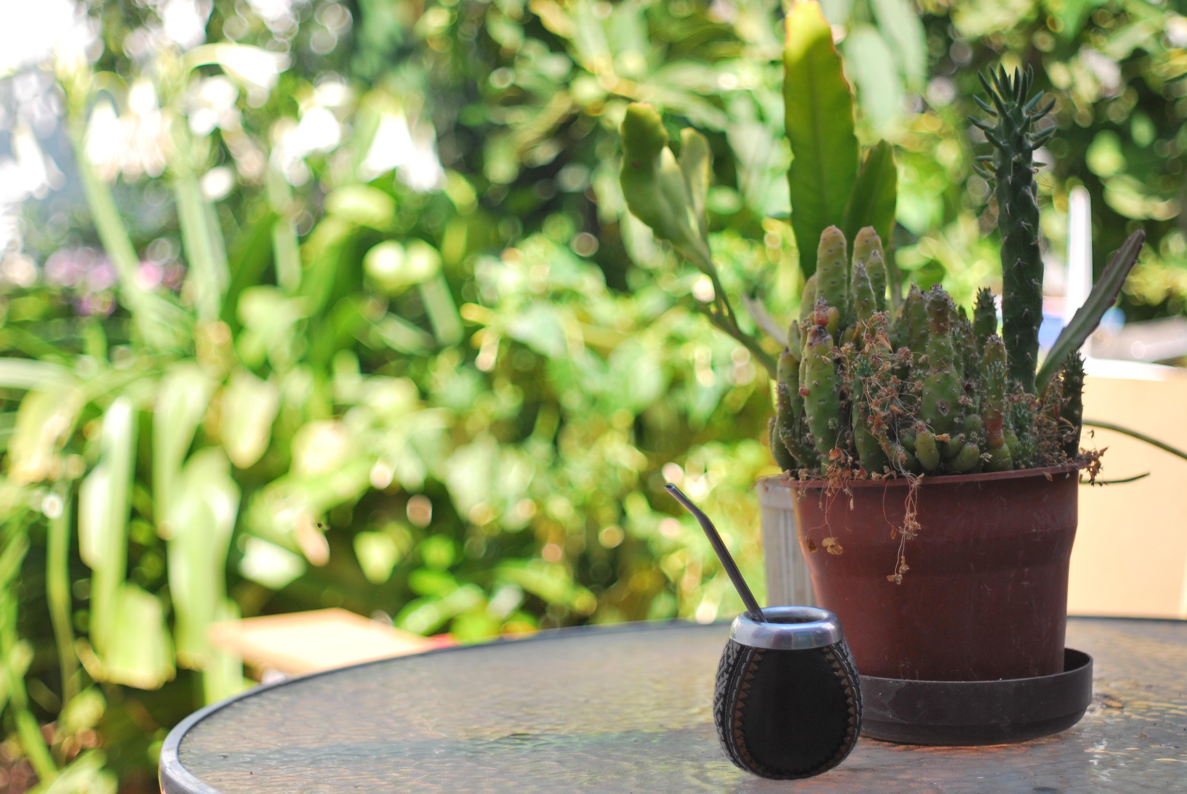 free images lawn flower green produce backyard soil botany