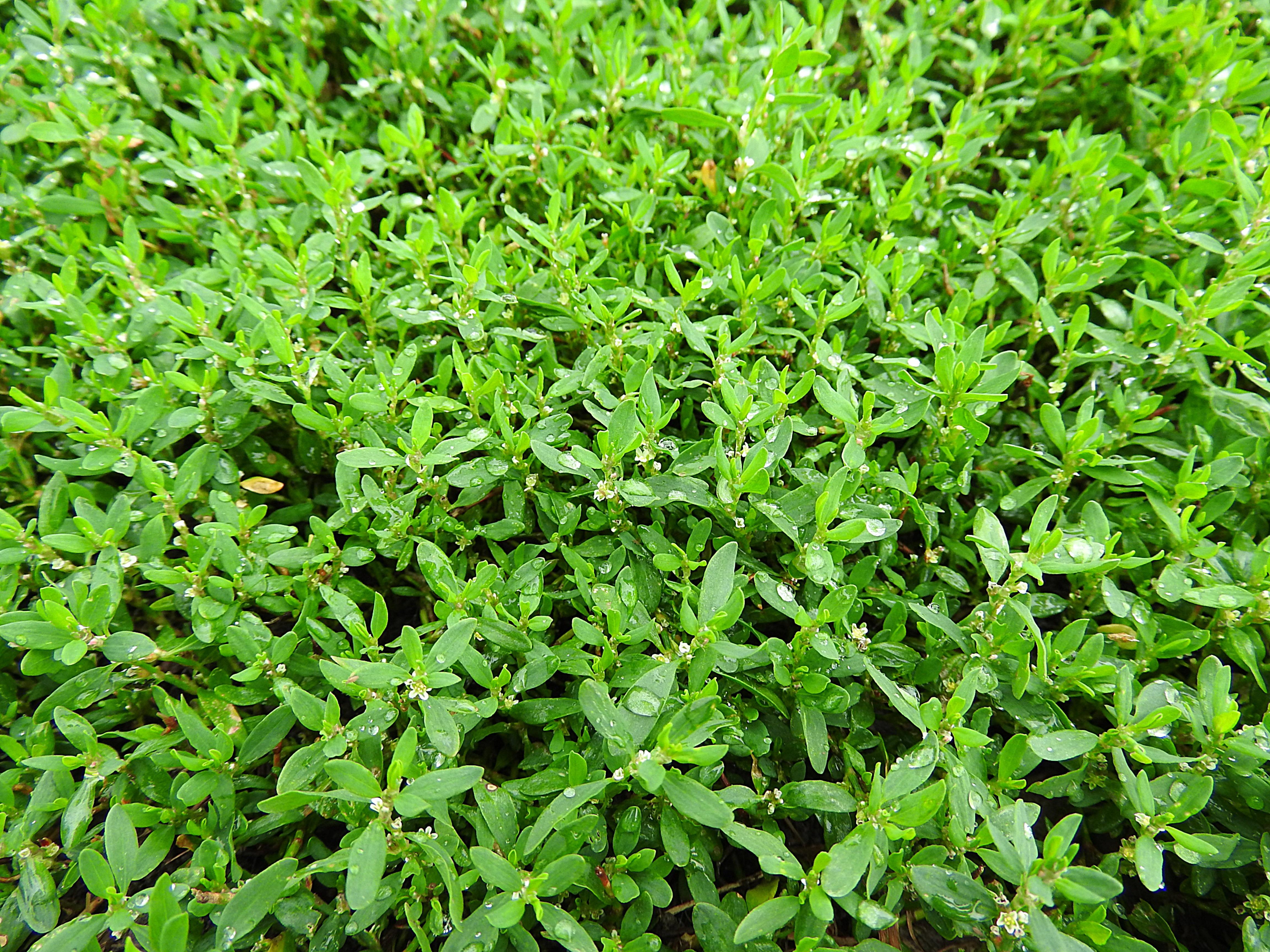Elegant Grüne Pflanzen Sammlung Von Gras Pflanze Rasen Blatt Blume Kraut Produzieren
