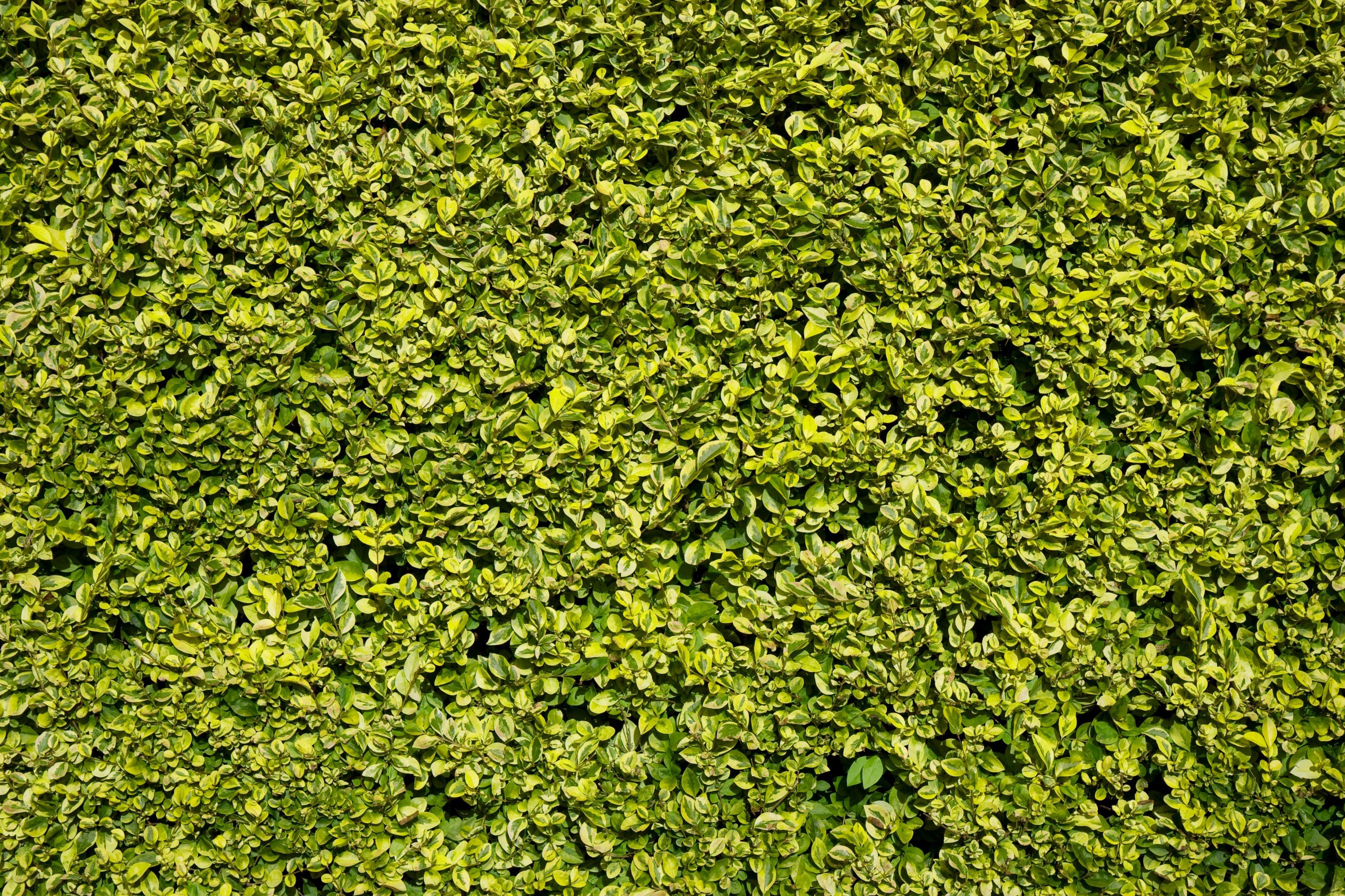 Kostenlose foto Gras Rasen Blatt Blume Moos Grün Boden