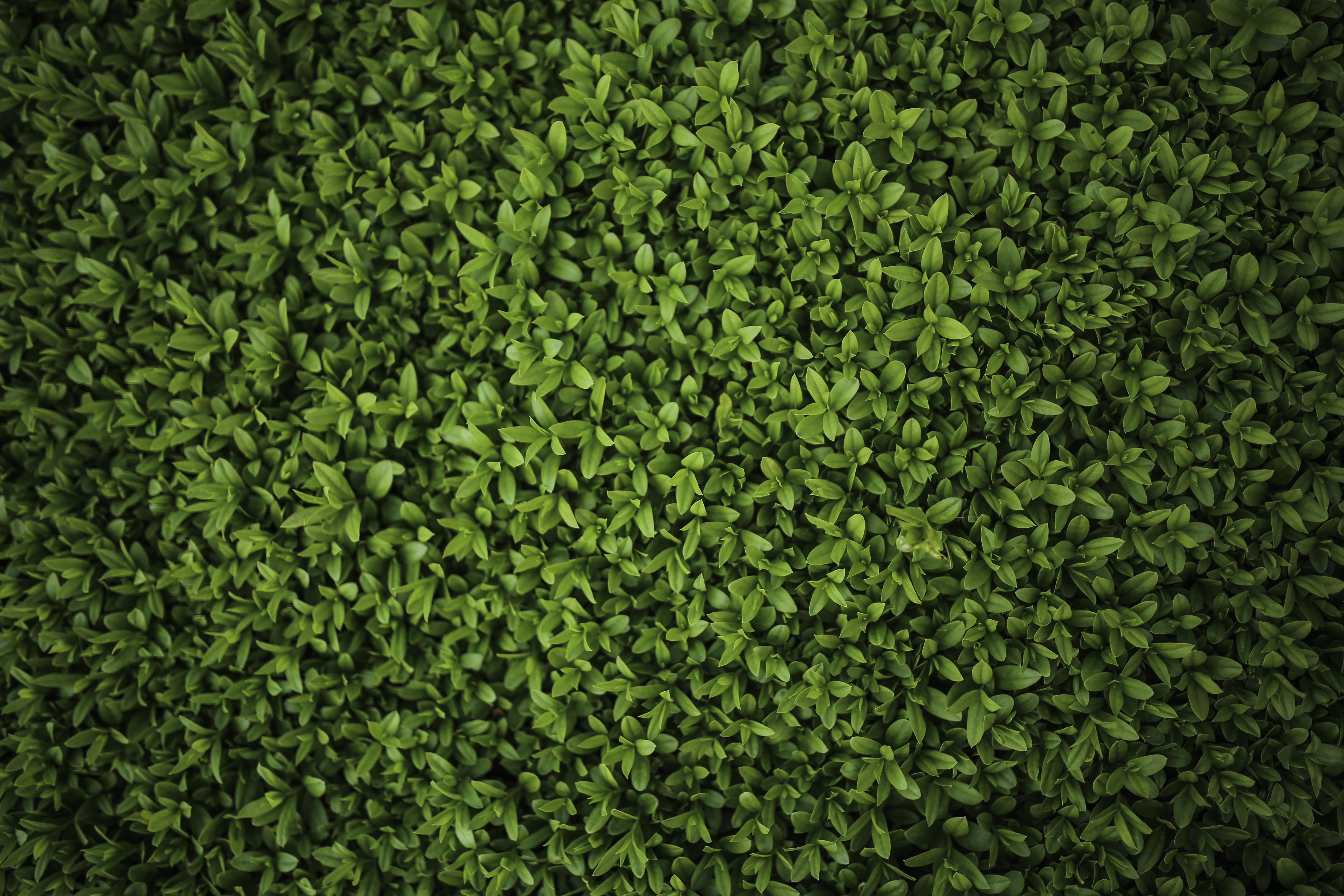 графика текстуры листья загрузить