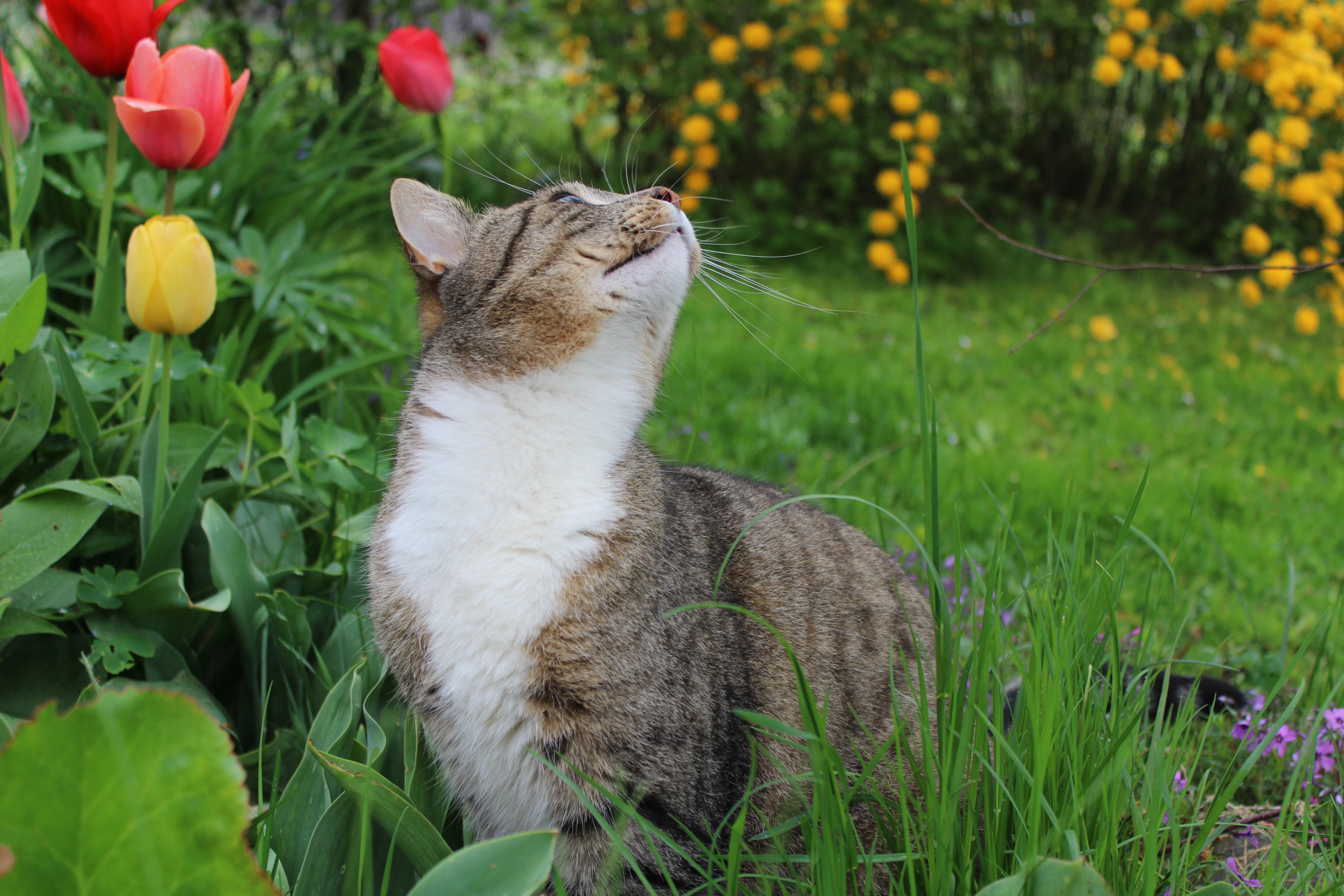 images gratuites herbe plante pelouse prairie fleur faune animal de compagnie chat. Black Bedroom Furniture Sets. Home Design Ideas