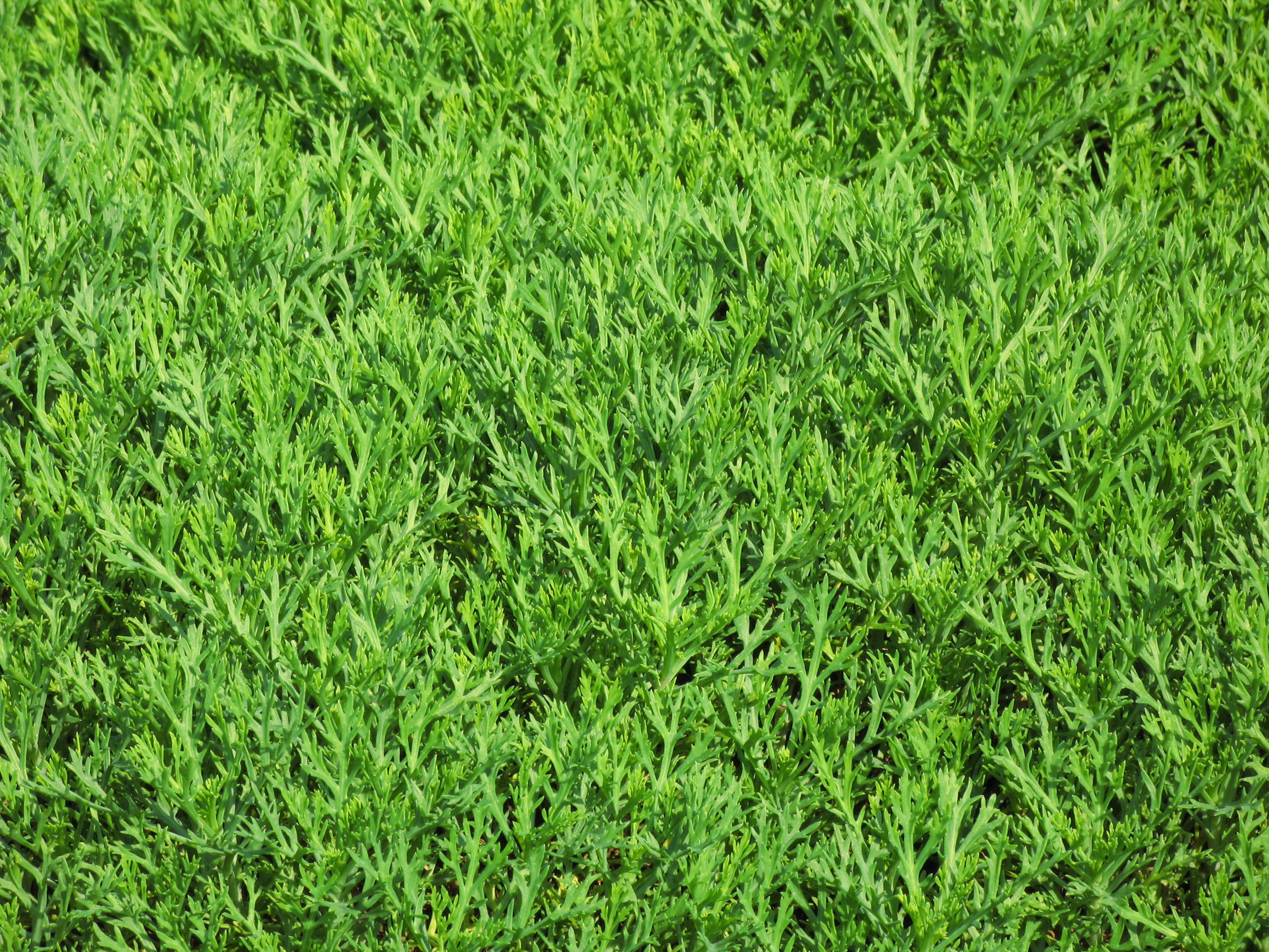 Fotos gratis prado hoja flor follaje patr n verde - Suelo hierba artificial ...
