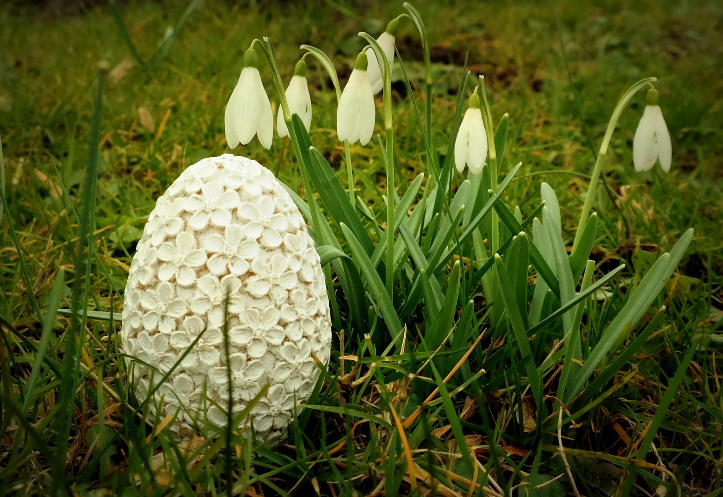 Gratis billeder : græs, græsplæne, eng, blad, blomst, forår, botanik, flora, æg, deco ...