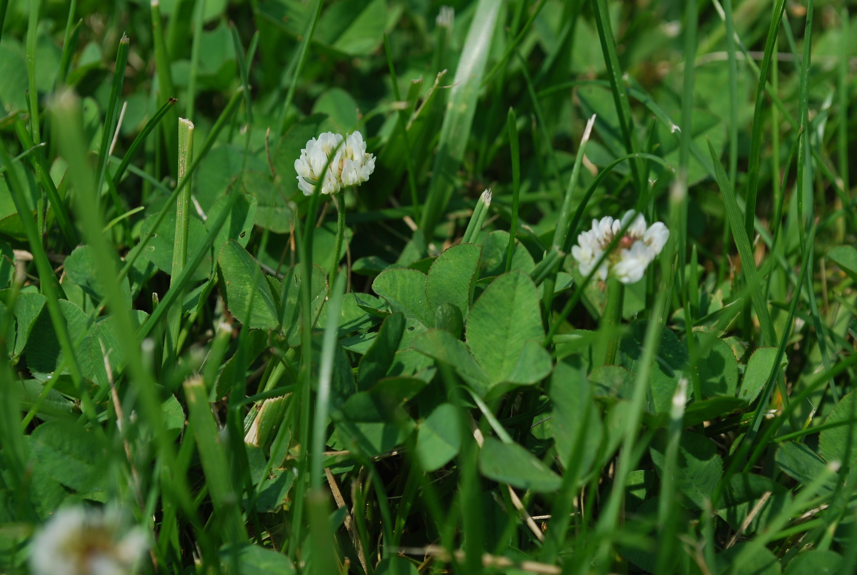 free images lawn meadow prairie flower petal bloom summer