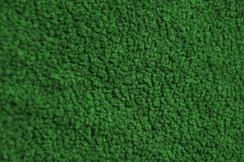 Fotos gratis planta textura hoja verde color macro suelo