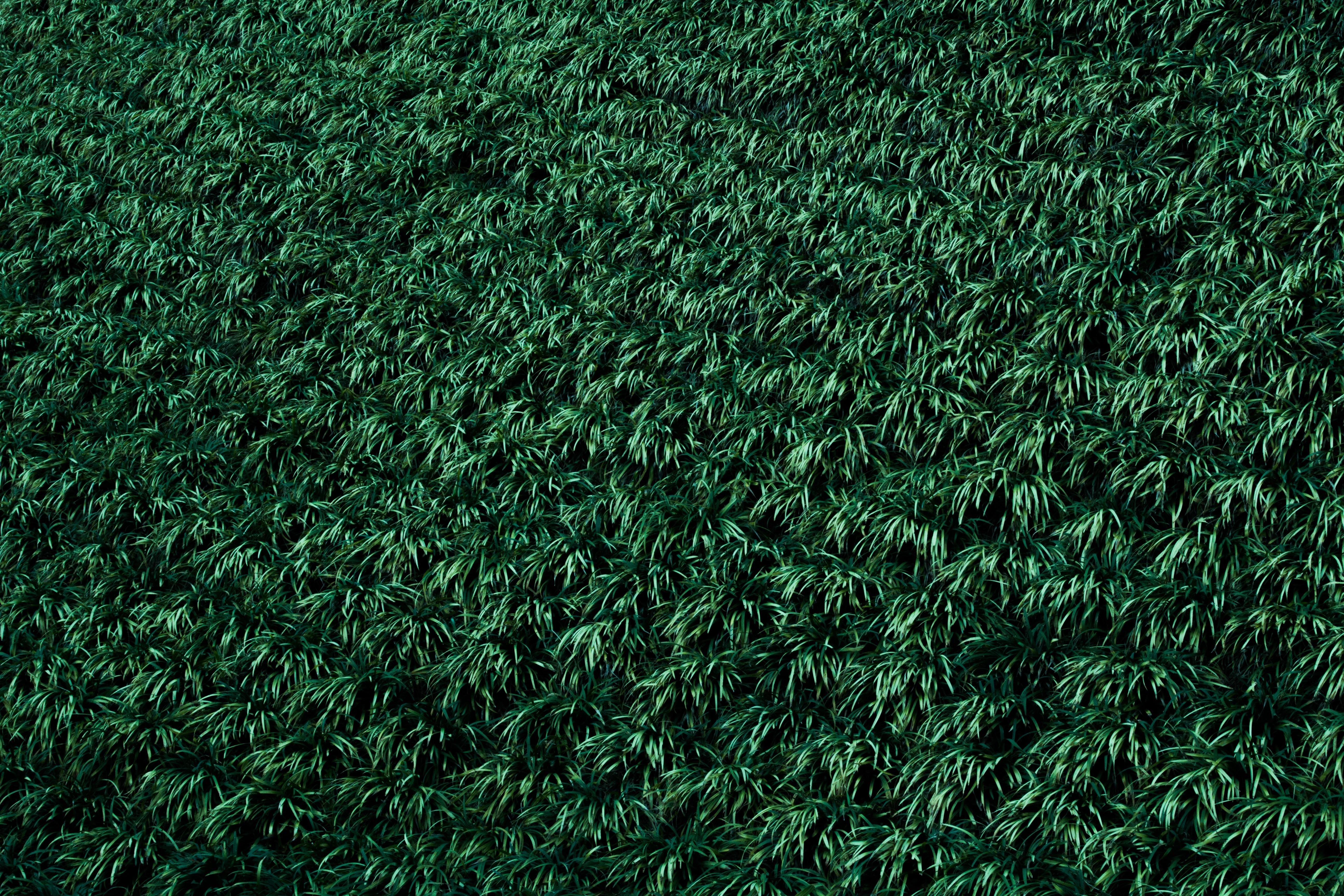 artificial turf texture. Grass Plant Lawn Texture Leaf Pattern Green Soil Shrub Net Flooring Artificial Turf U