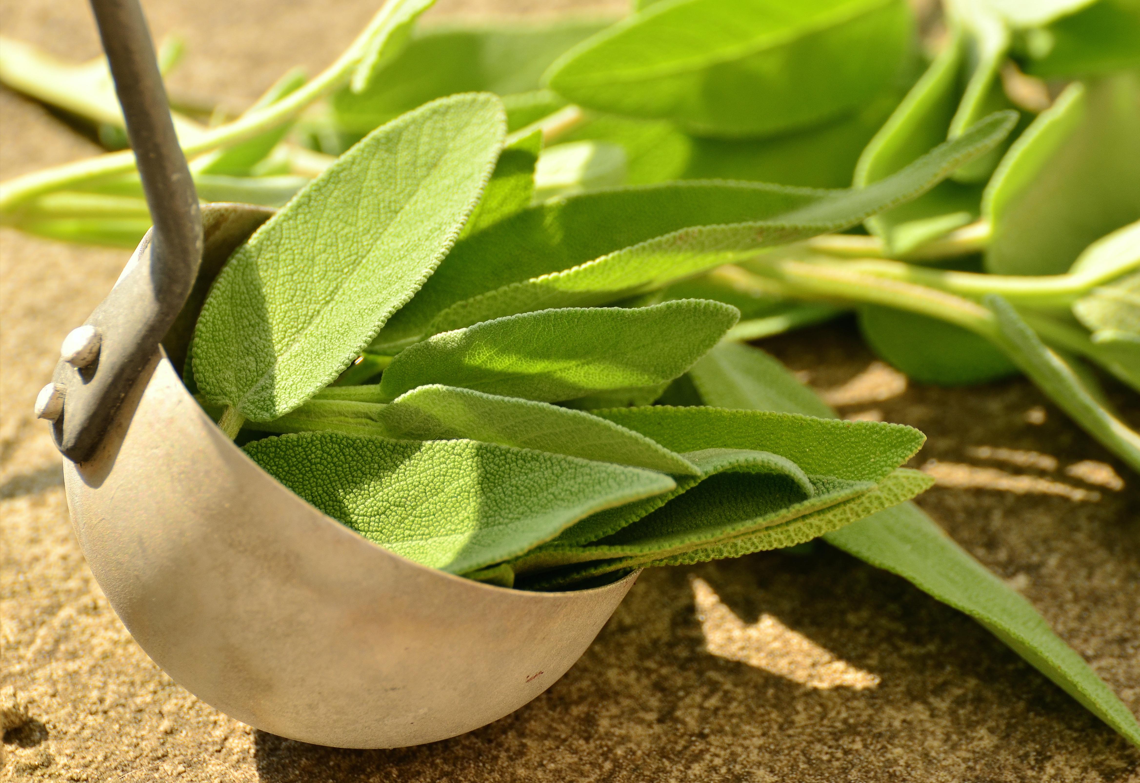 images gratuites : herbe, feuille, fleur, arôme, aliments, vert