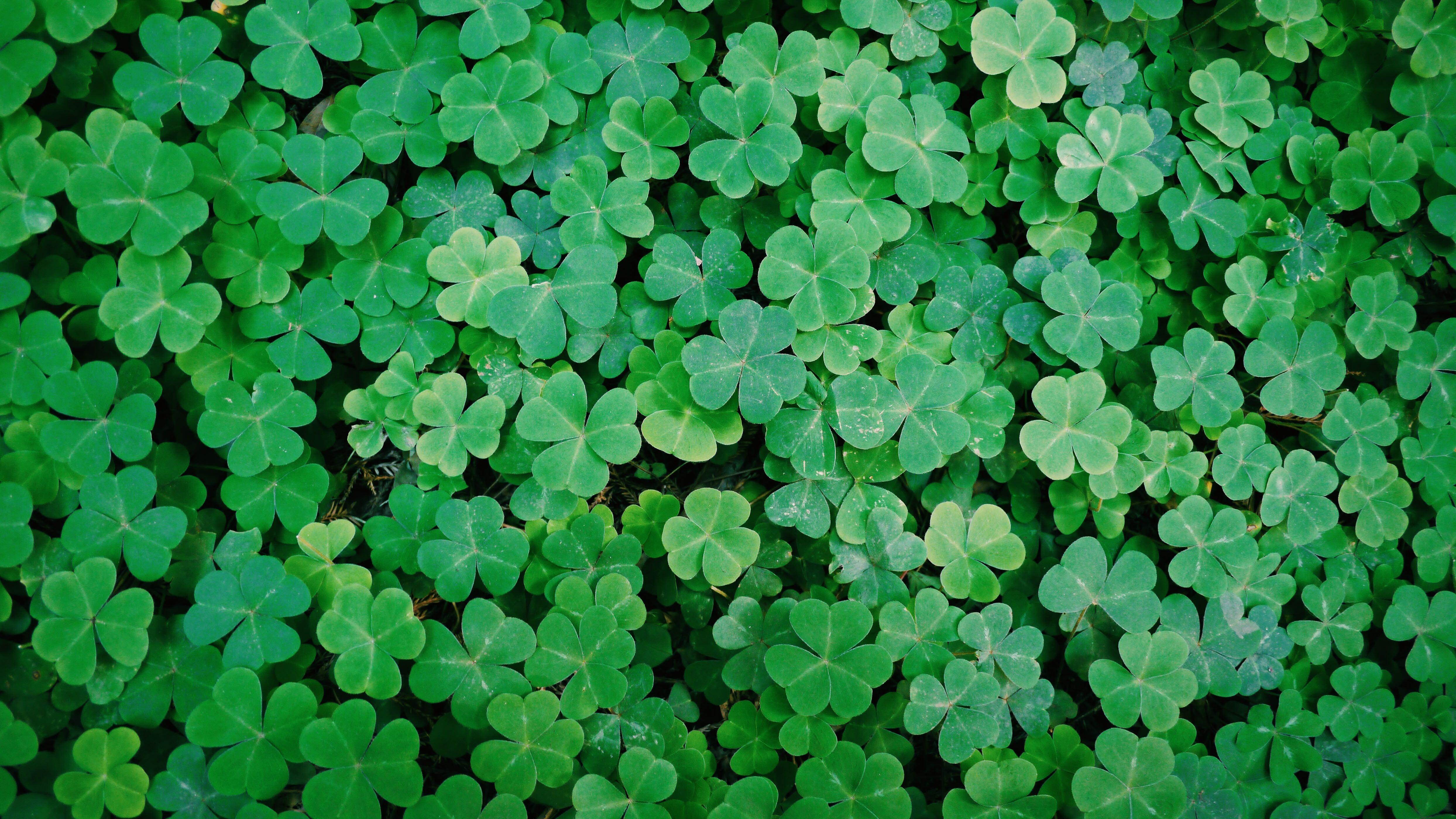gratis afbeeldingen   gras  fabriek  blad  bloem  land