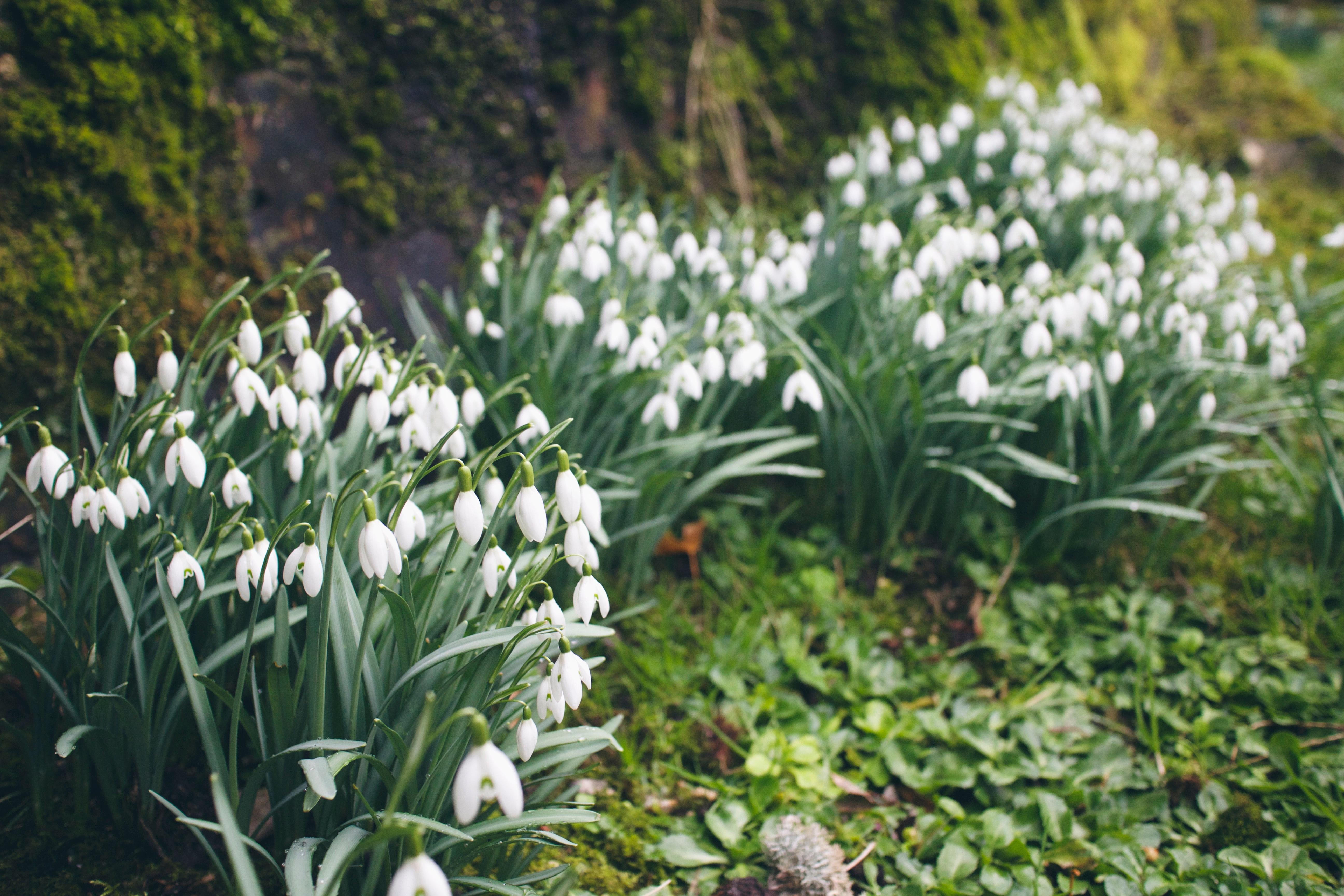 Kostenlose Foto Gras Wiese Blume Botanik Garten Flora
