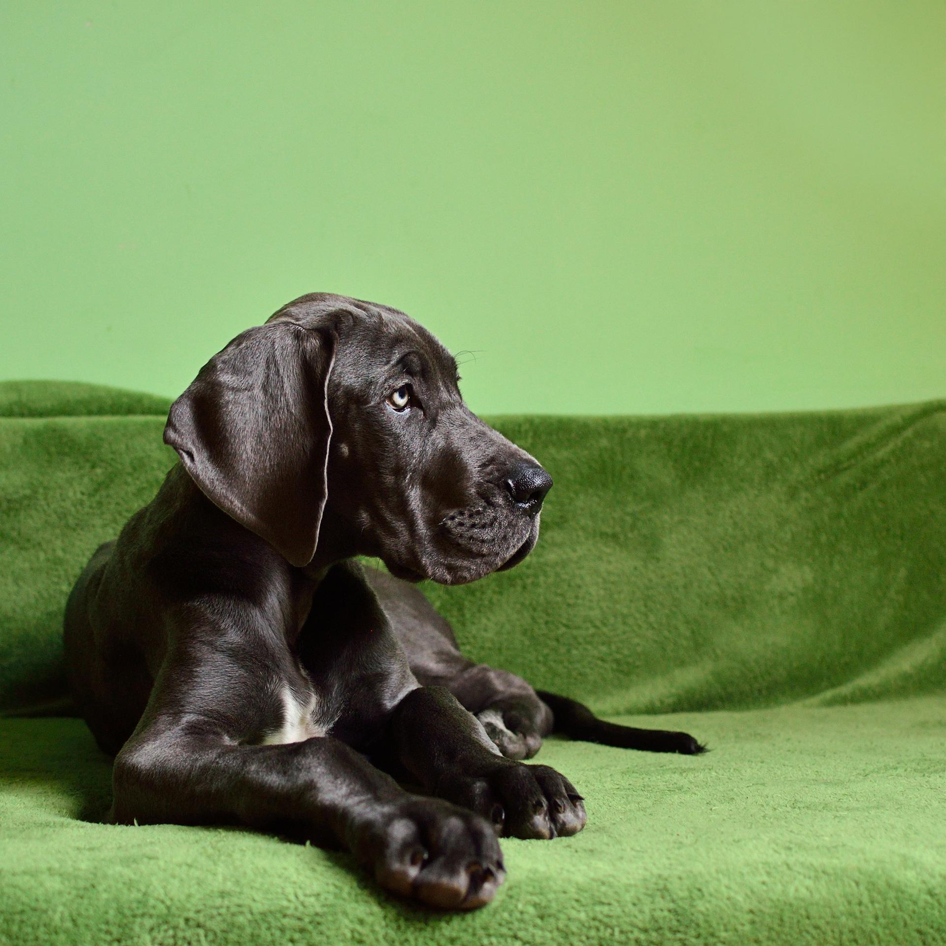 Gratis Afbeeldingen Gras Fabriek Puppy Snuit