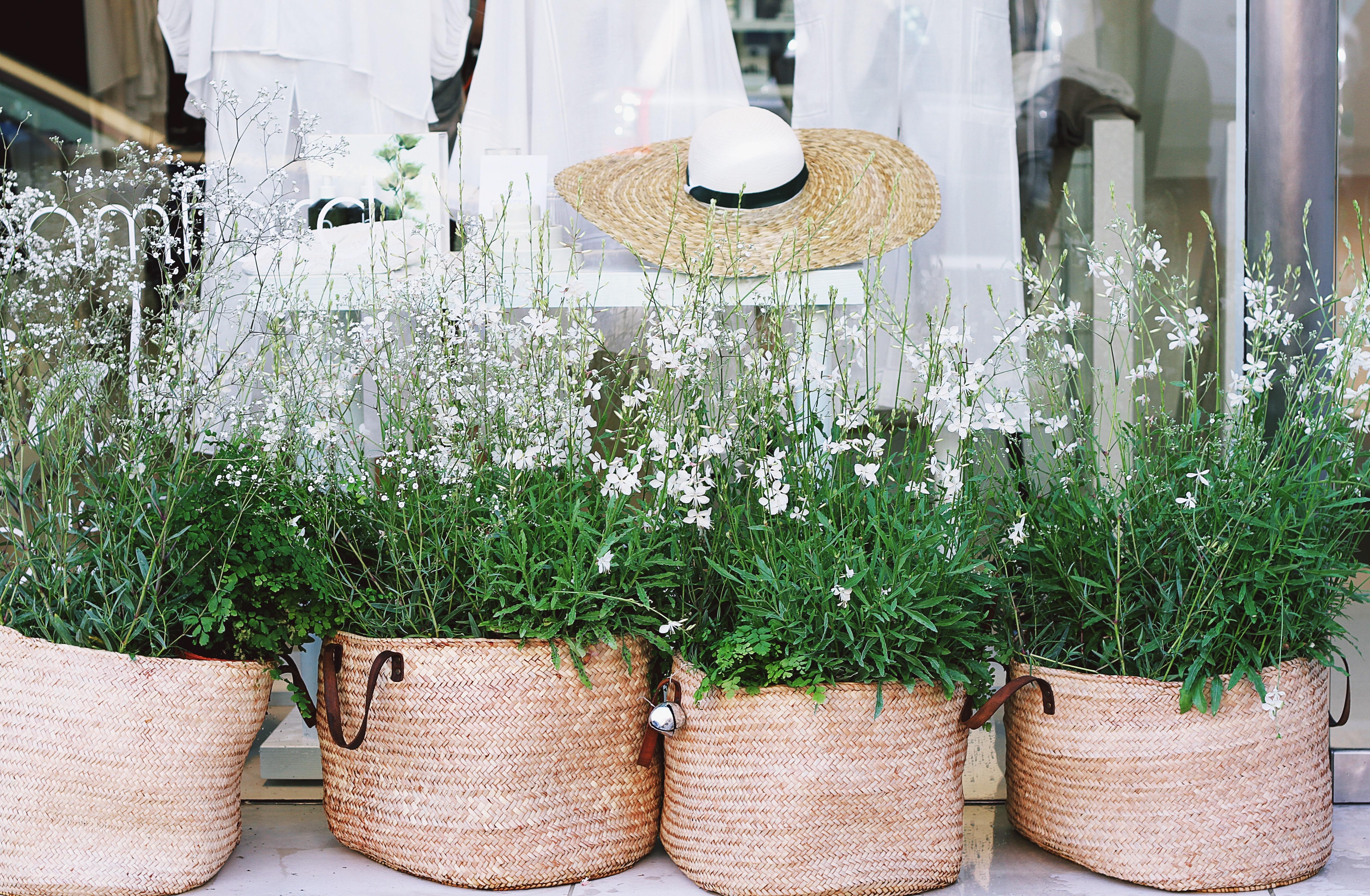 Free Images Plant White Shop Herb Bag Basket Flowerpot