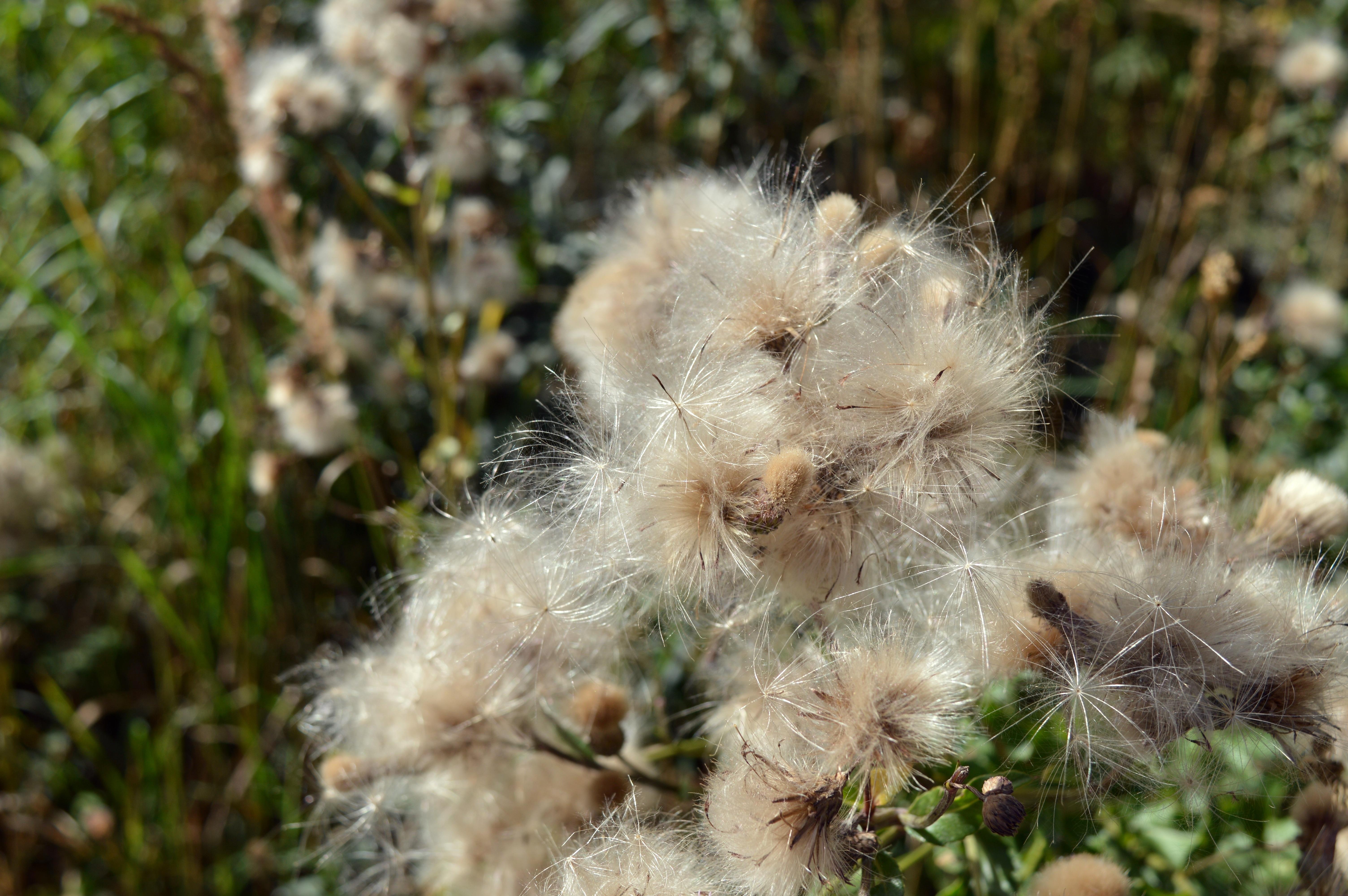 Free Images Grass White Flower Wildlife Closeup Flora Fauna