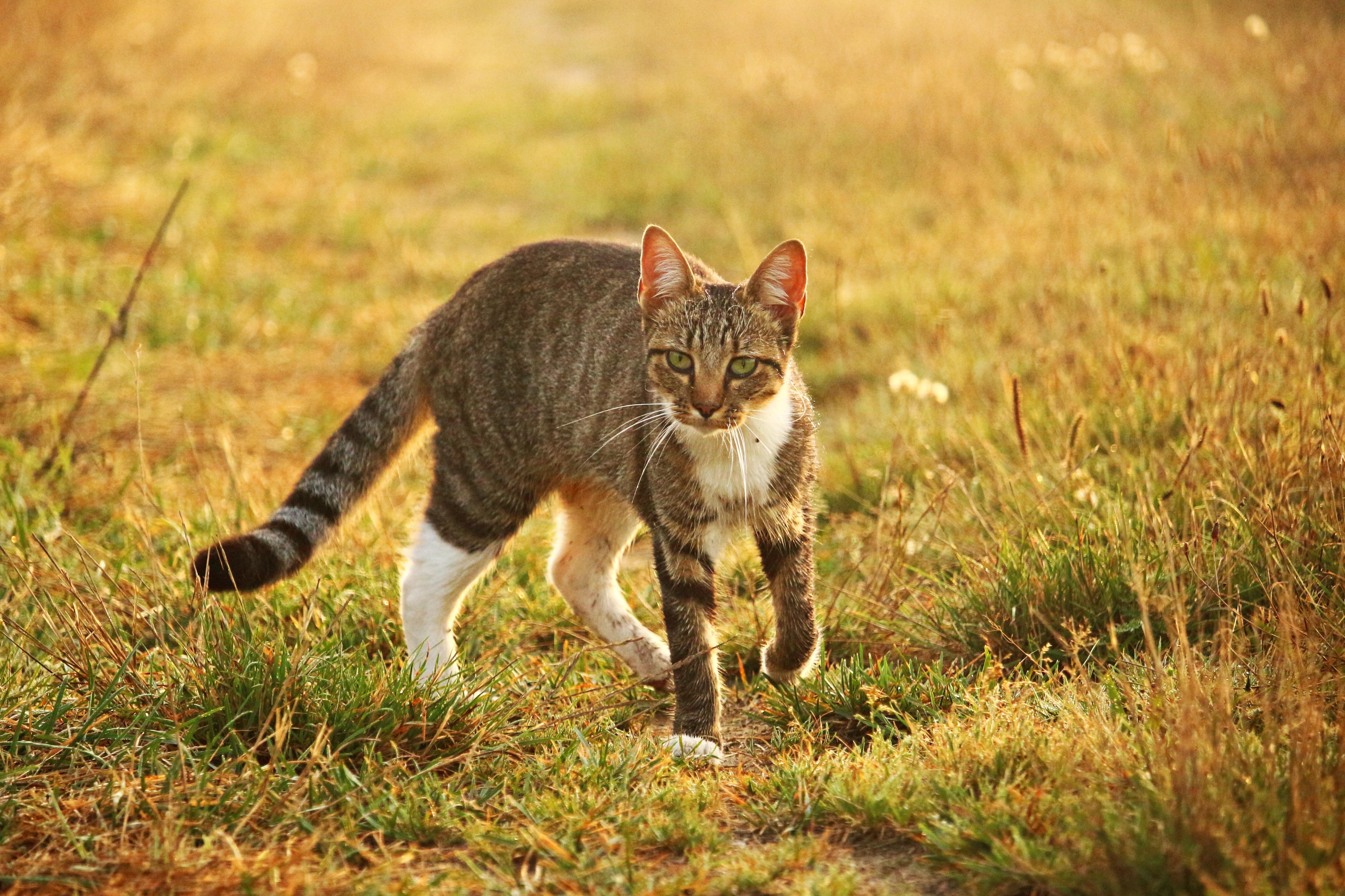 фото домашних котов на природе этот