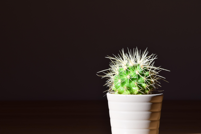 hình ảnh : Gai, cây xương rồng, thực vật, màu xanh lá, Hệ thực vật, cây nhà, Deco, đẹp, chậu hoa, thiệp mừng, Sting, Nhọn, Chụp macro, Cây cảnh, ...