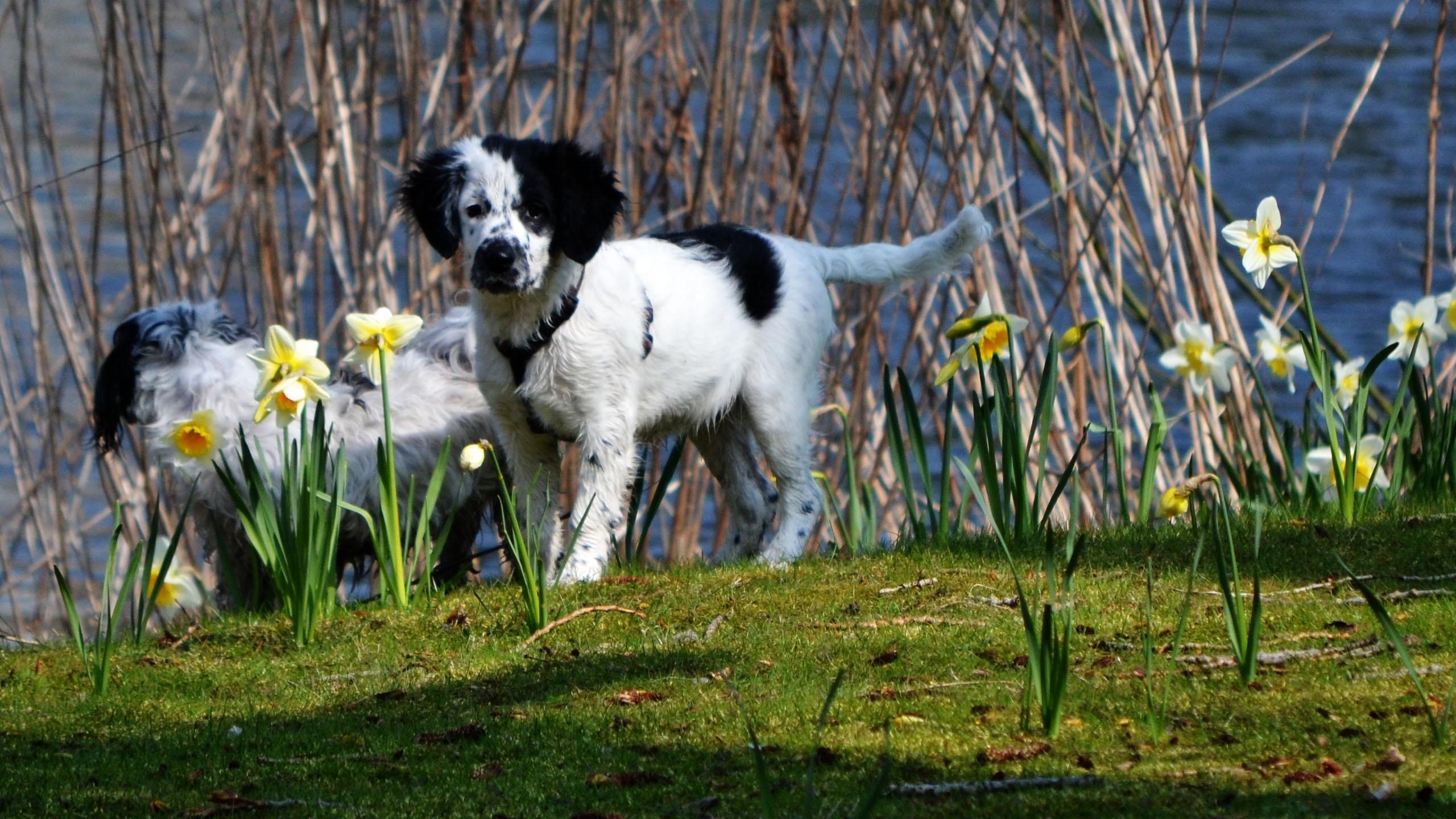 Фото собак весной