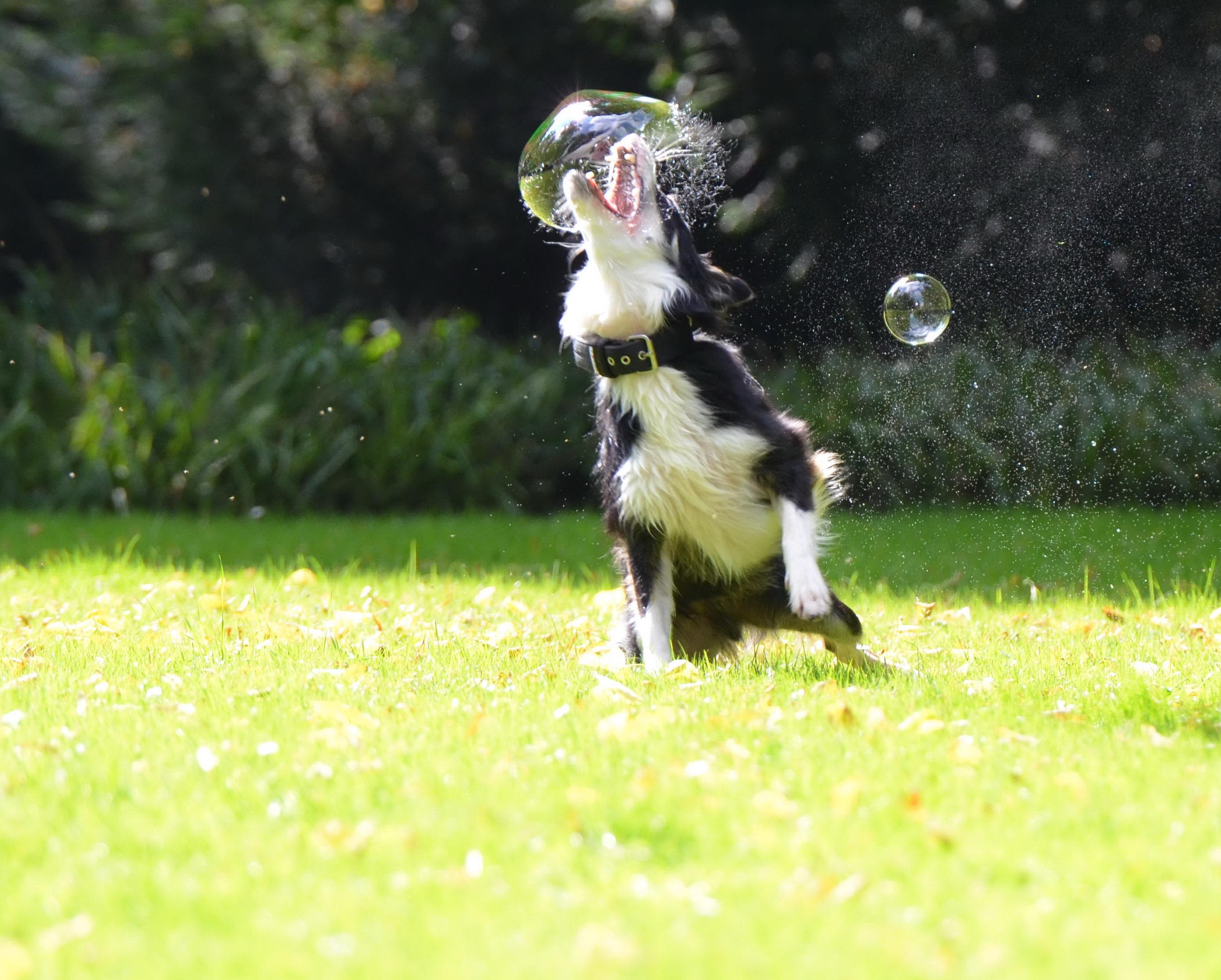 Прикольные картинки с пузырем