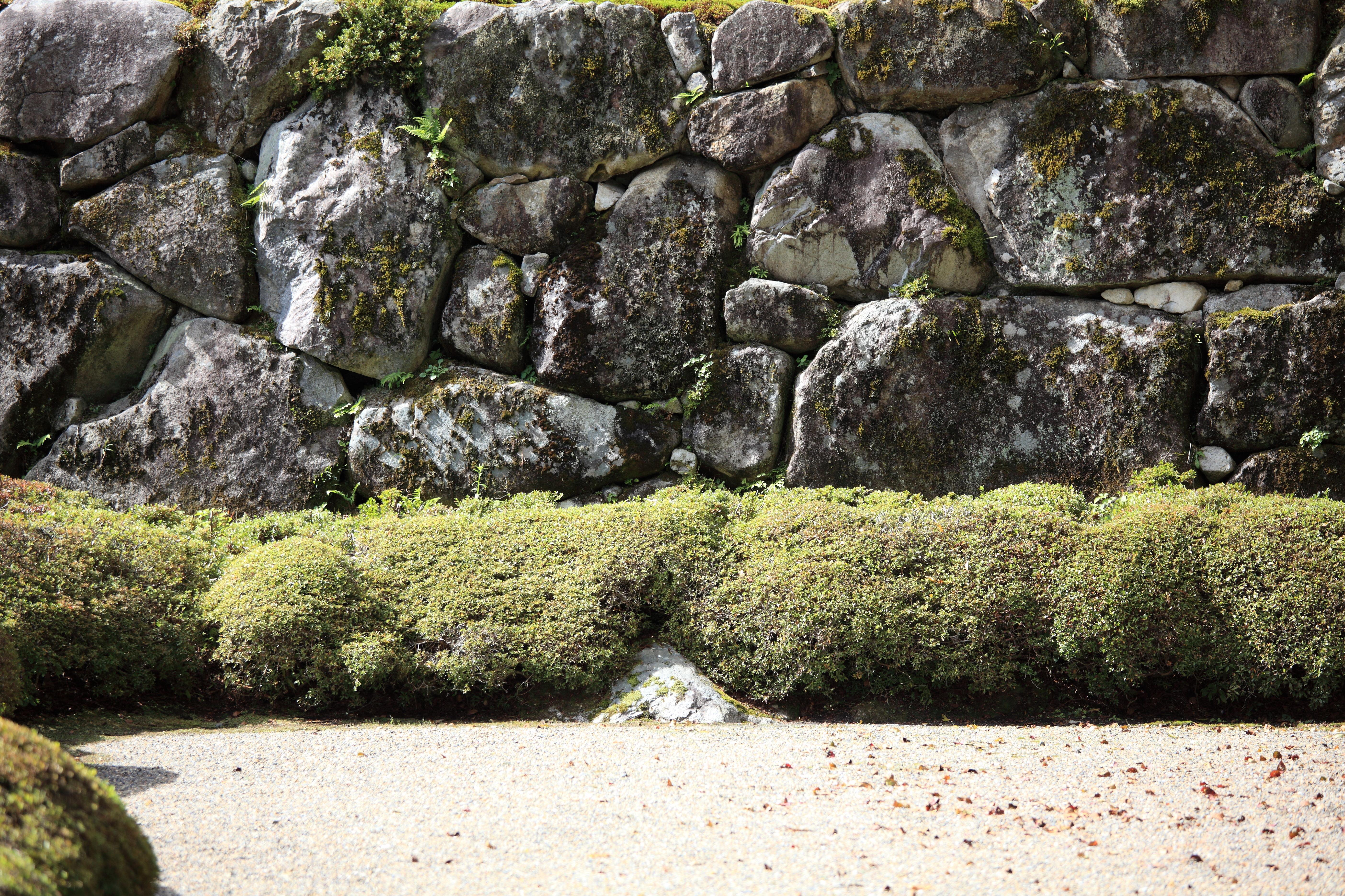 Stenen Muur Tuin : Gratis afbeeldingen gras rots bloem steen hoog stenen muur