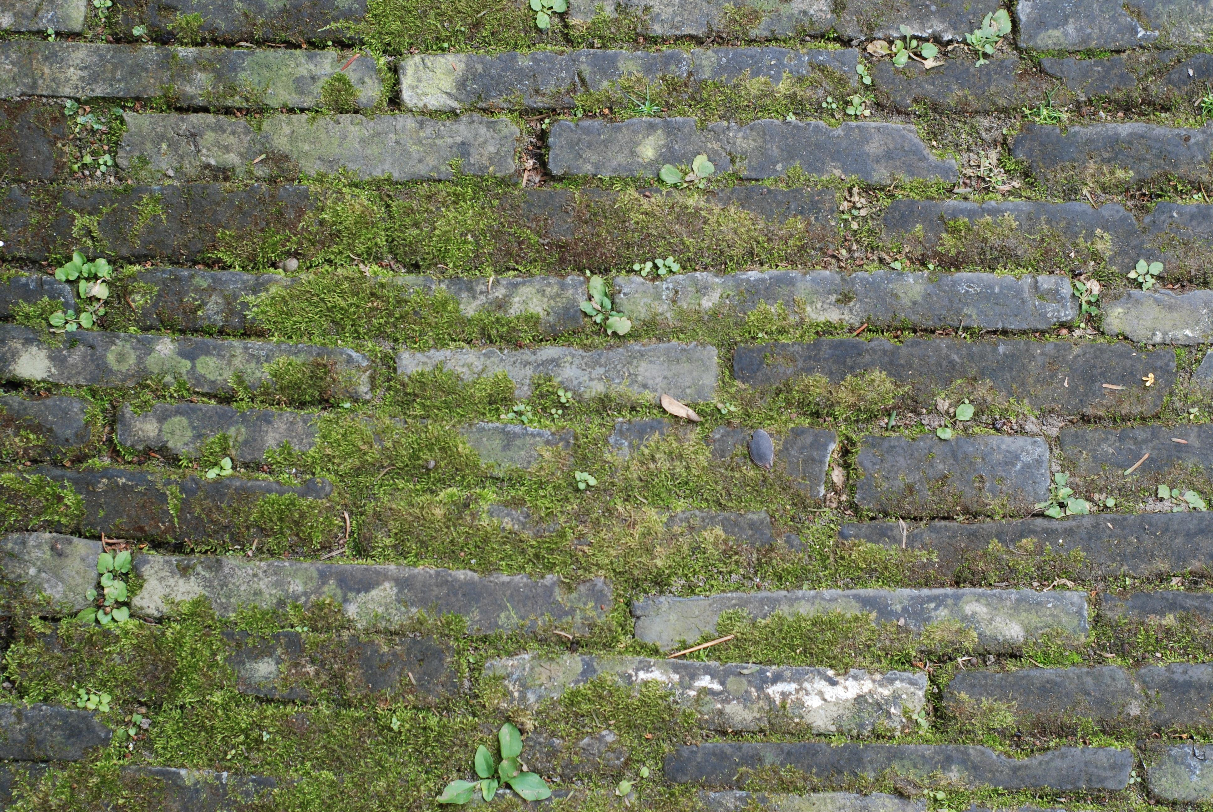 Kostenlose Foto Gras Rock Boden Rasen Textur Mauer Moos