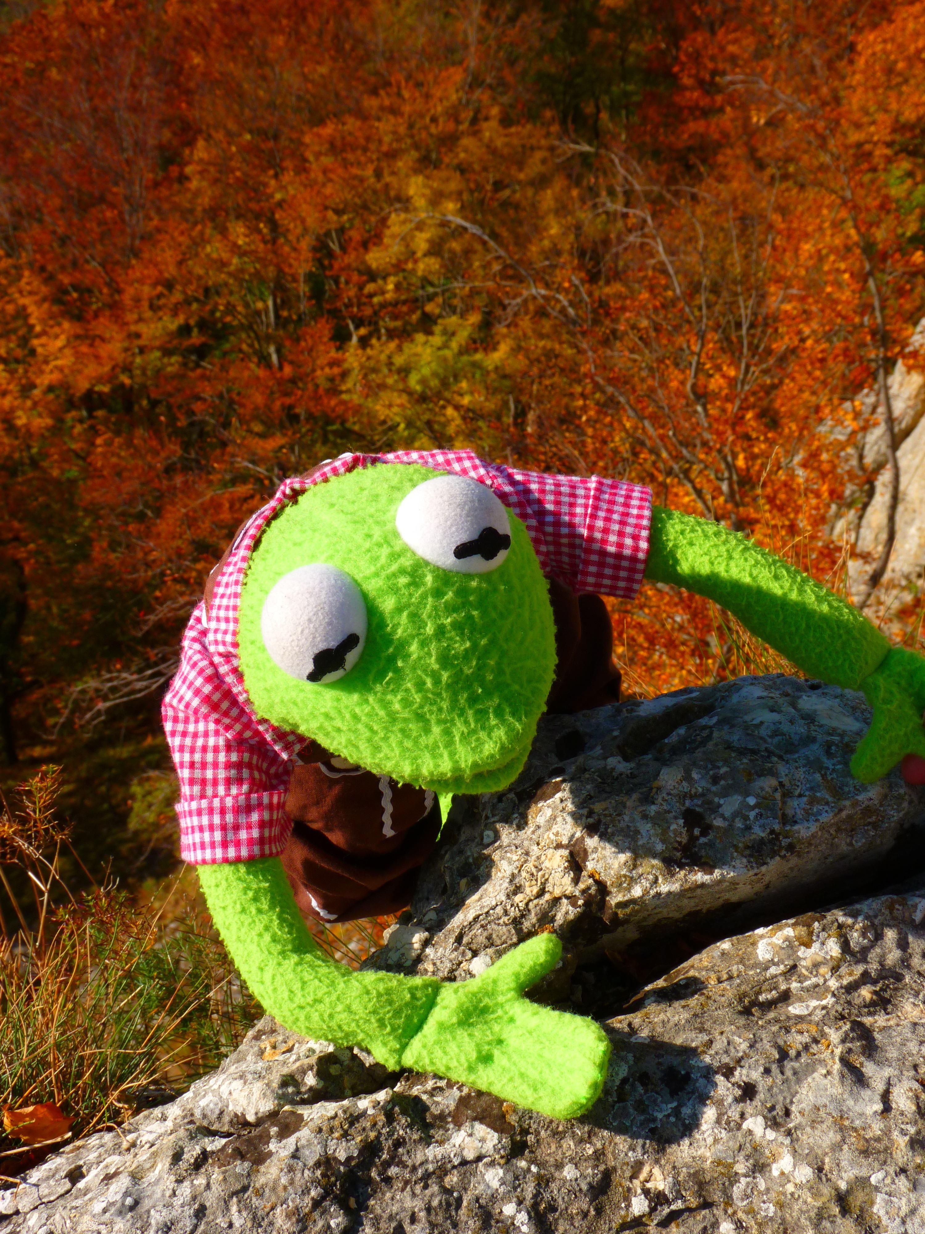 Fotos gratis : césped, rock, hoja, fauna silvestre, verde, otoño ...
