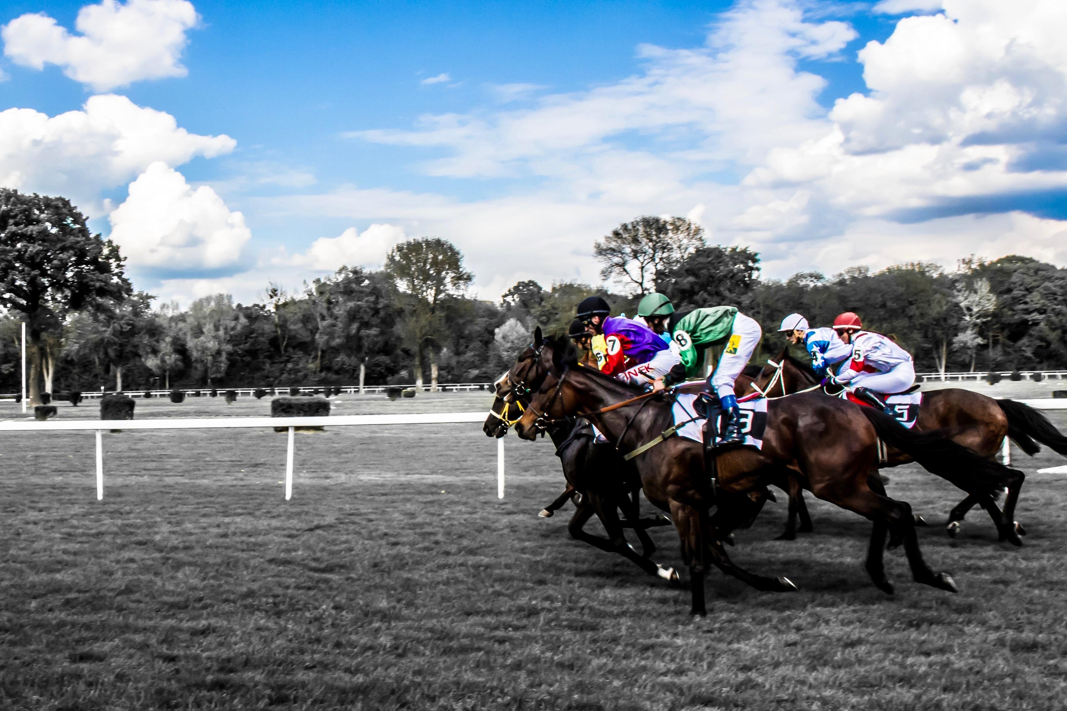Grass Run Horse Race Competition Horses Sports Racing Jockey Track Gallop Hippodrome