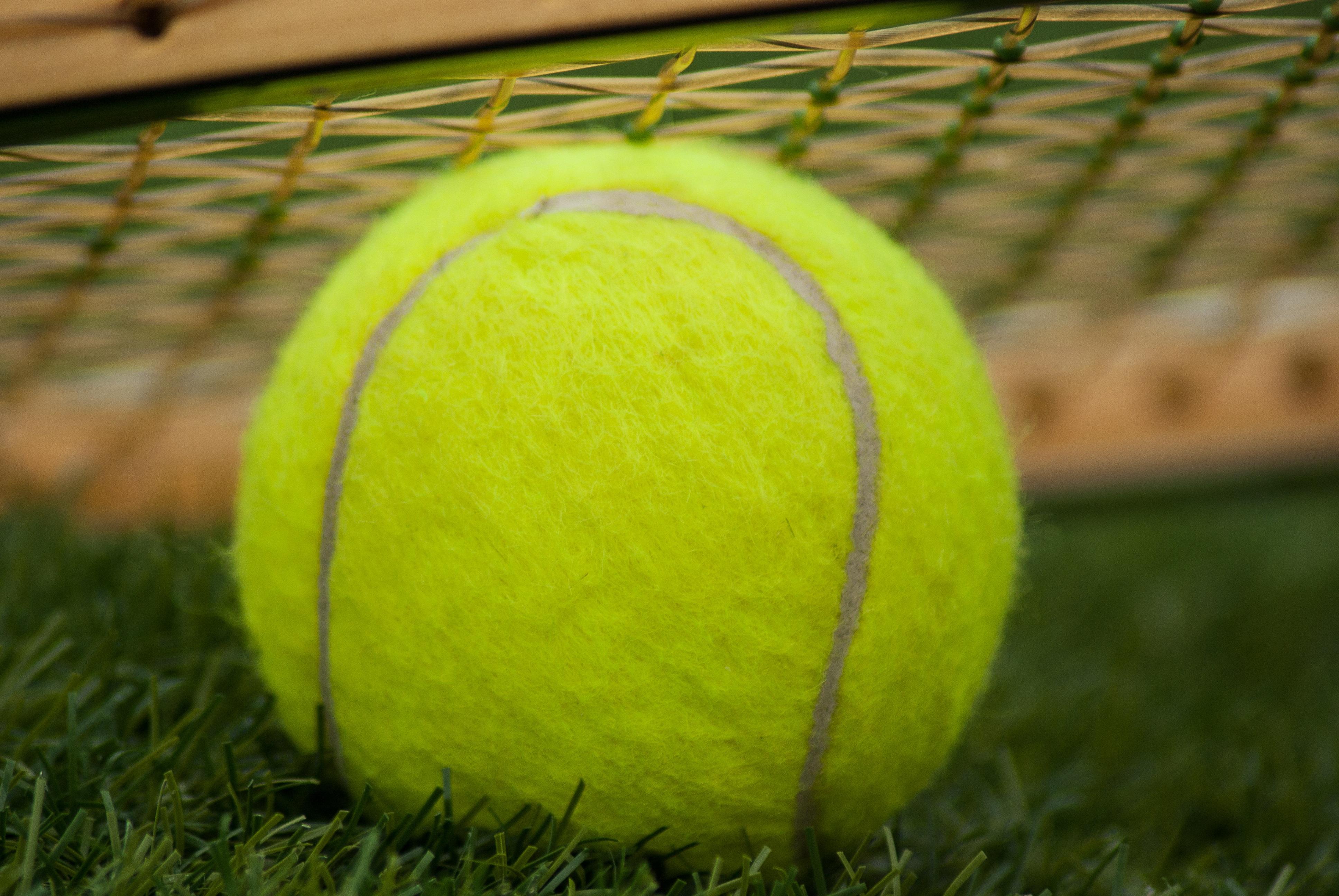 346e040d Bildet : gress, sport, grønn, gul, sportsutstyr, tennis, nett, ball ...