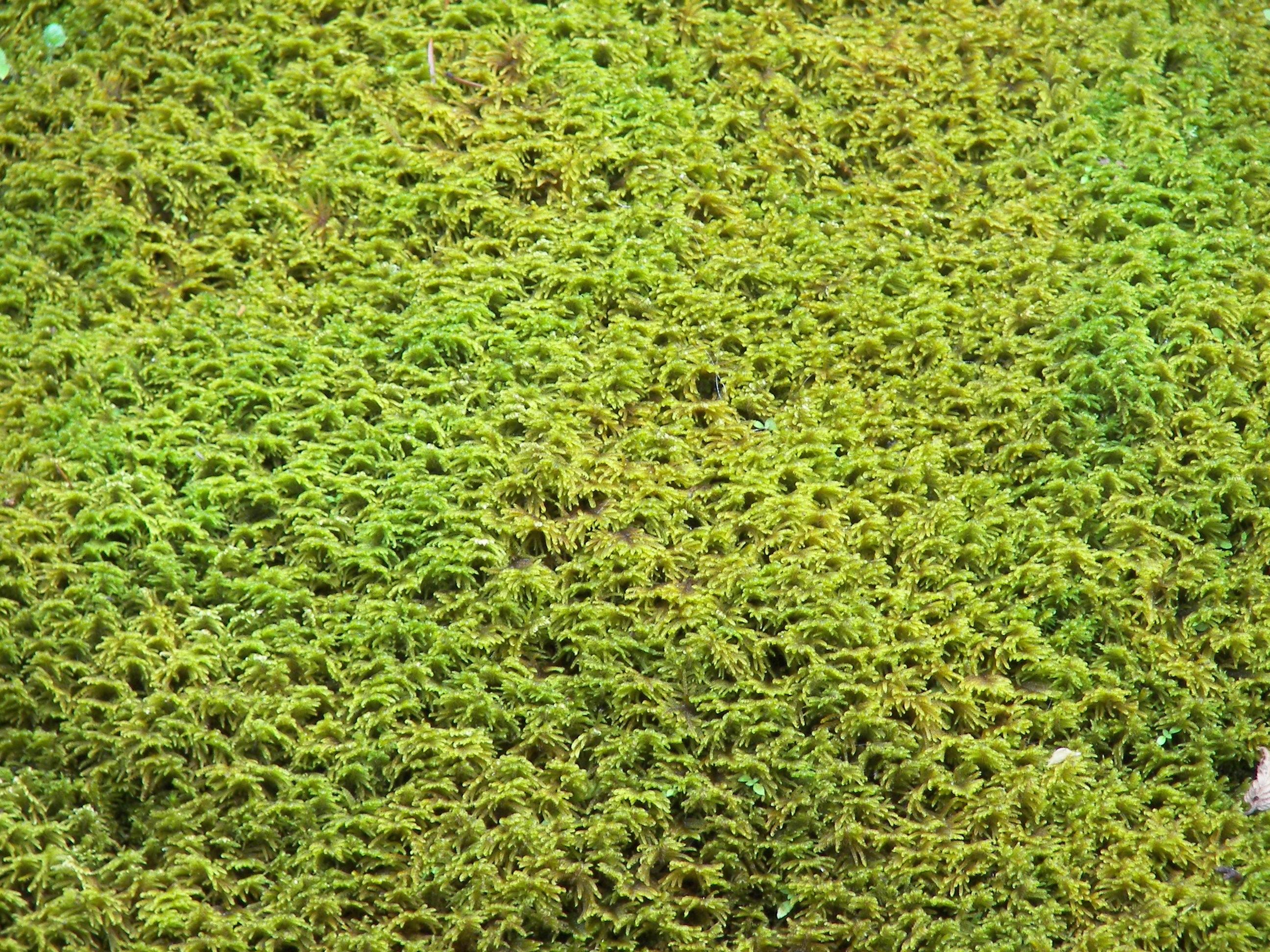 Plante gazon cheap vente chaude mur vert herbe en for Arbuste plastique