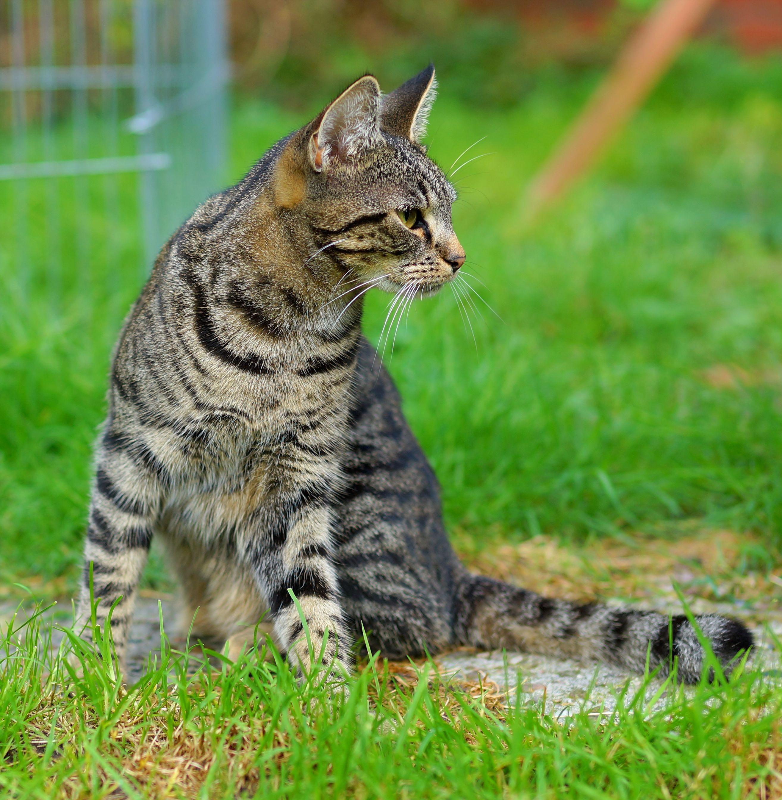 Download 78+  Gambar Kucing Lucu Di Taman Paling Lucu Gratis