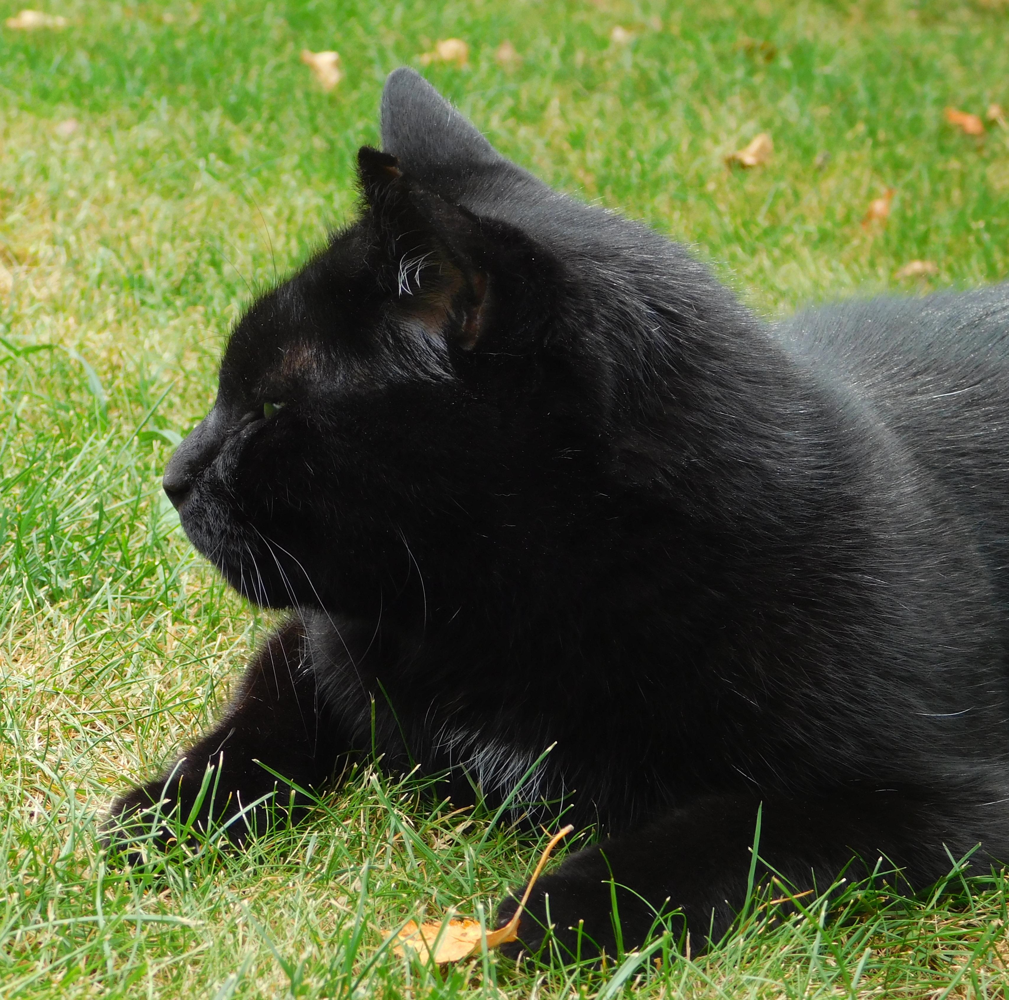 Fotky mladé černé kočičky