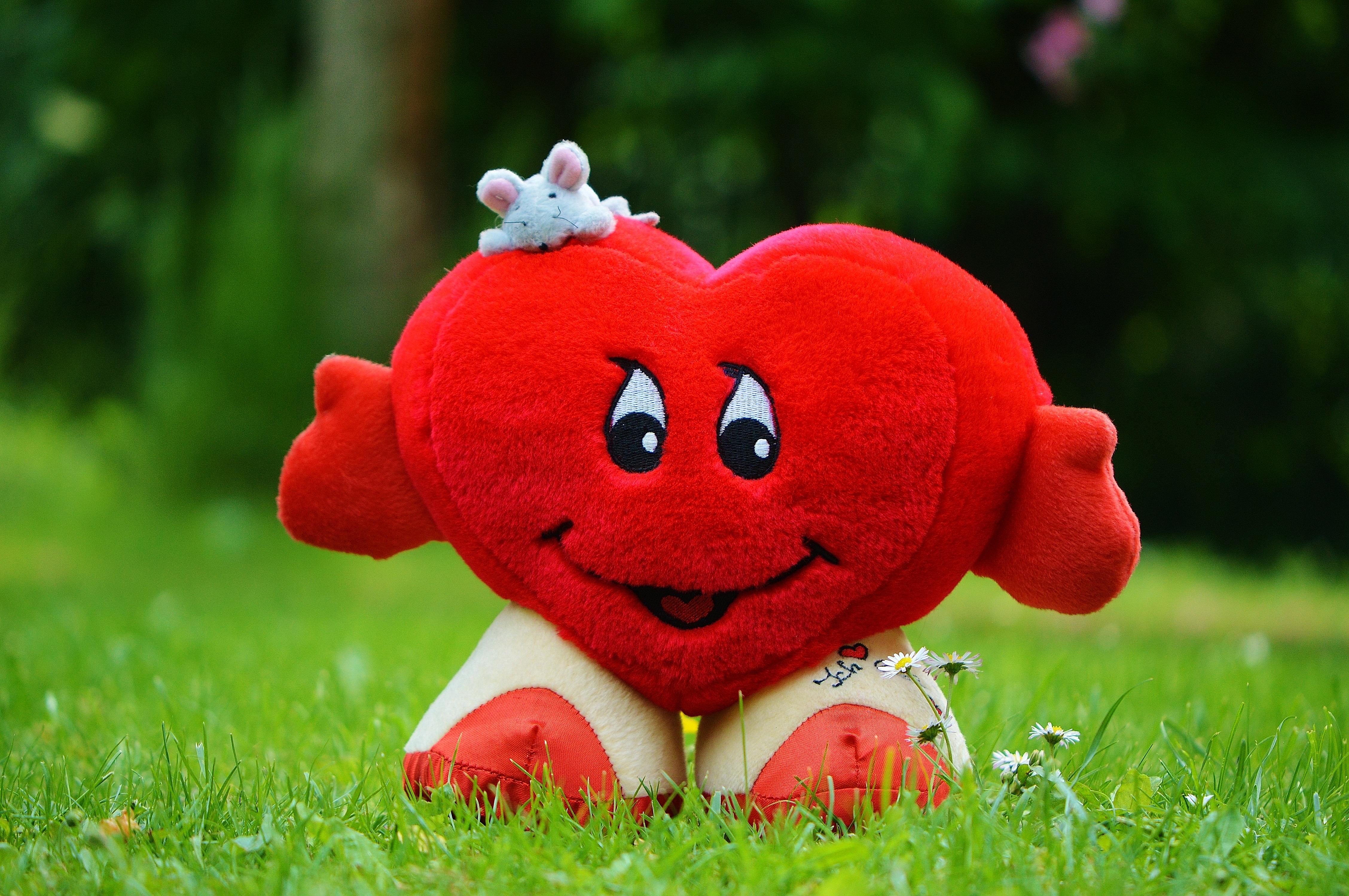 Kostenlose Foto Gras Suss Blume Maus Liebe Herz Rot