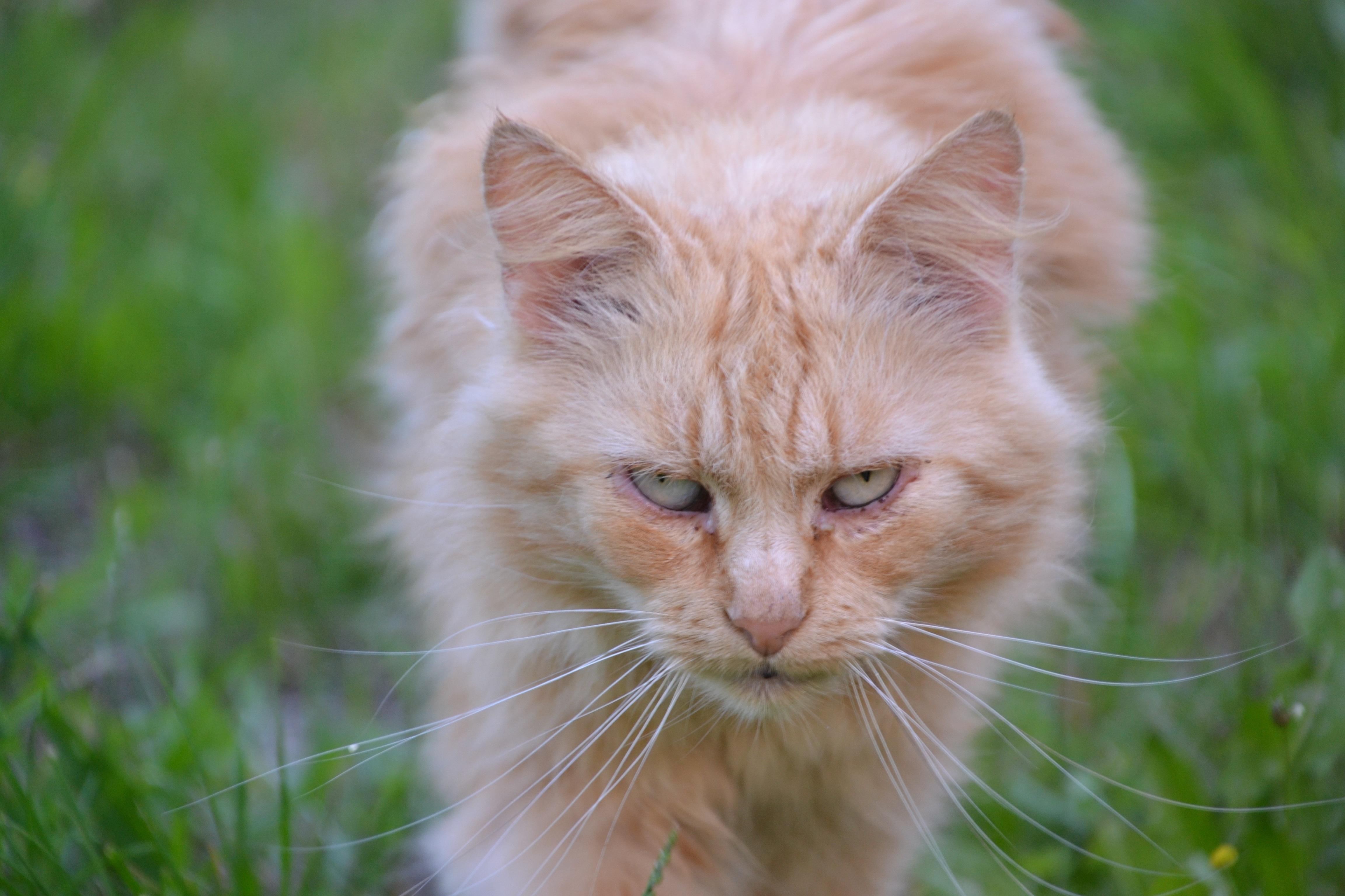 Download 99+  Gambar Kucing Jahat Imut