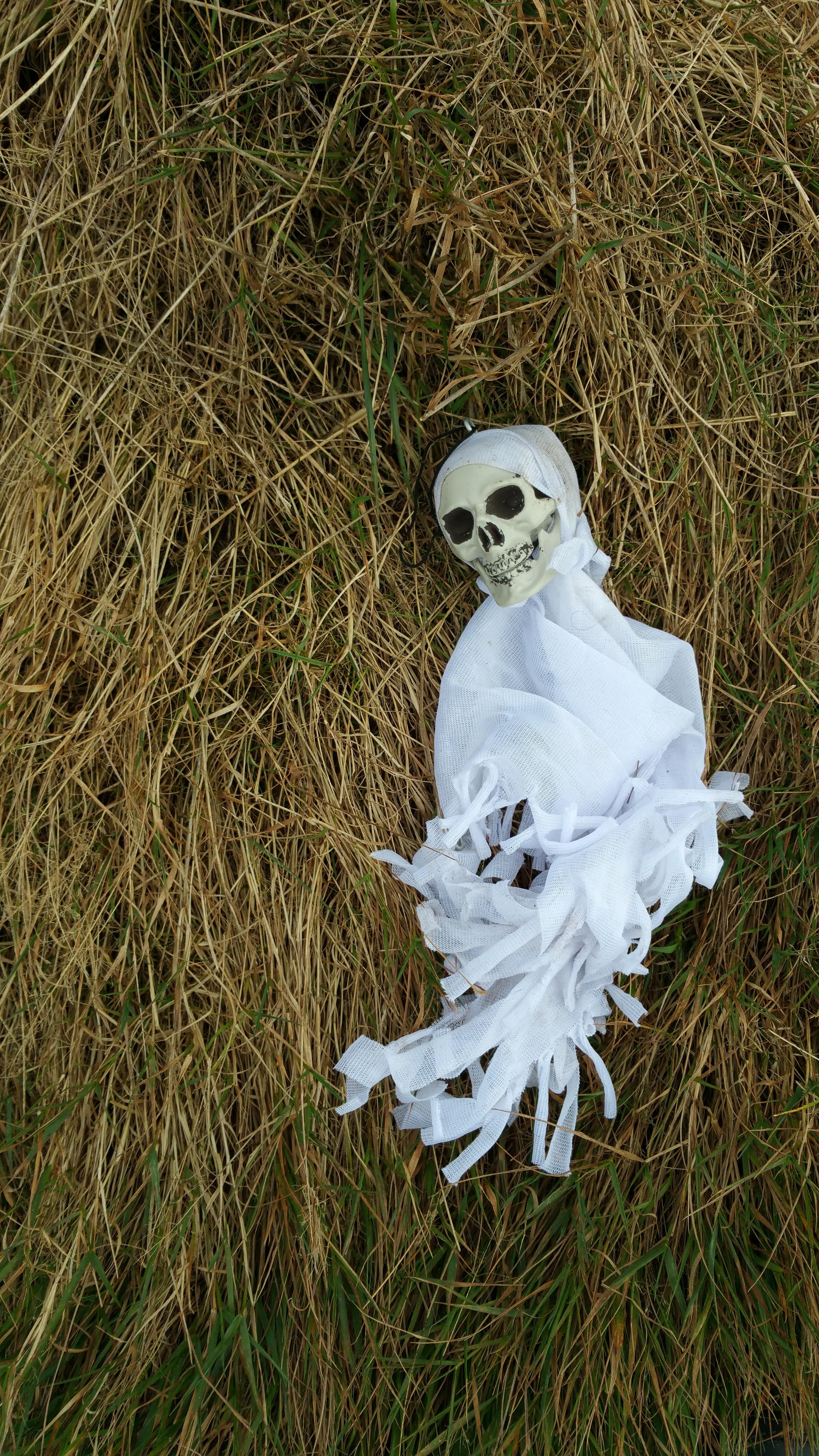 Free images grass white hay flower statue halloween death grass white hay flower statue halloween death skull sculpture spirit decore mightylinksfo